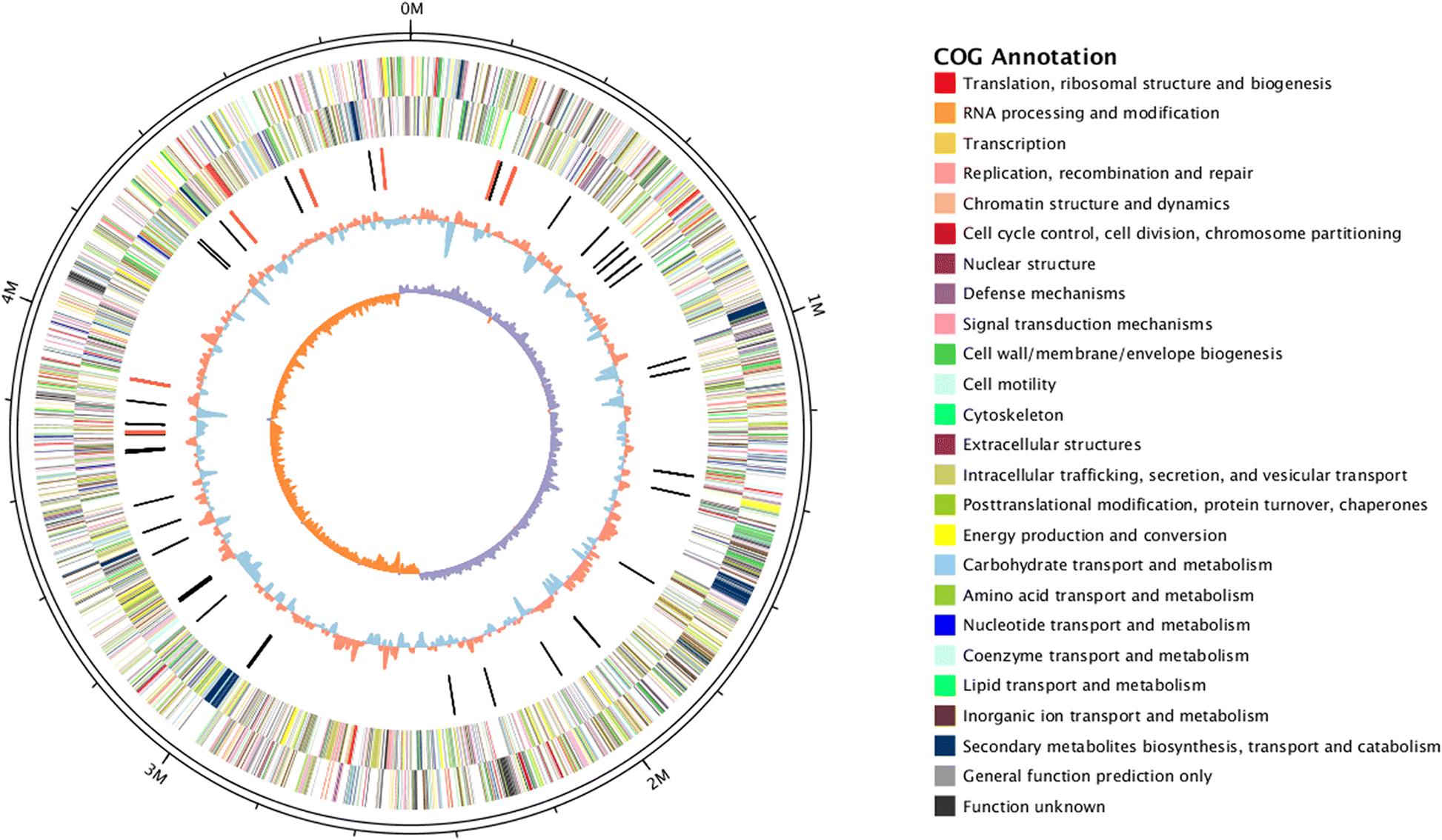 Genomic analysis of the Phalaenopsis pathogen Dickeya sp