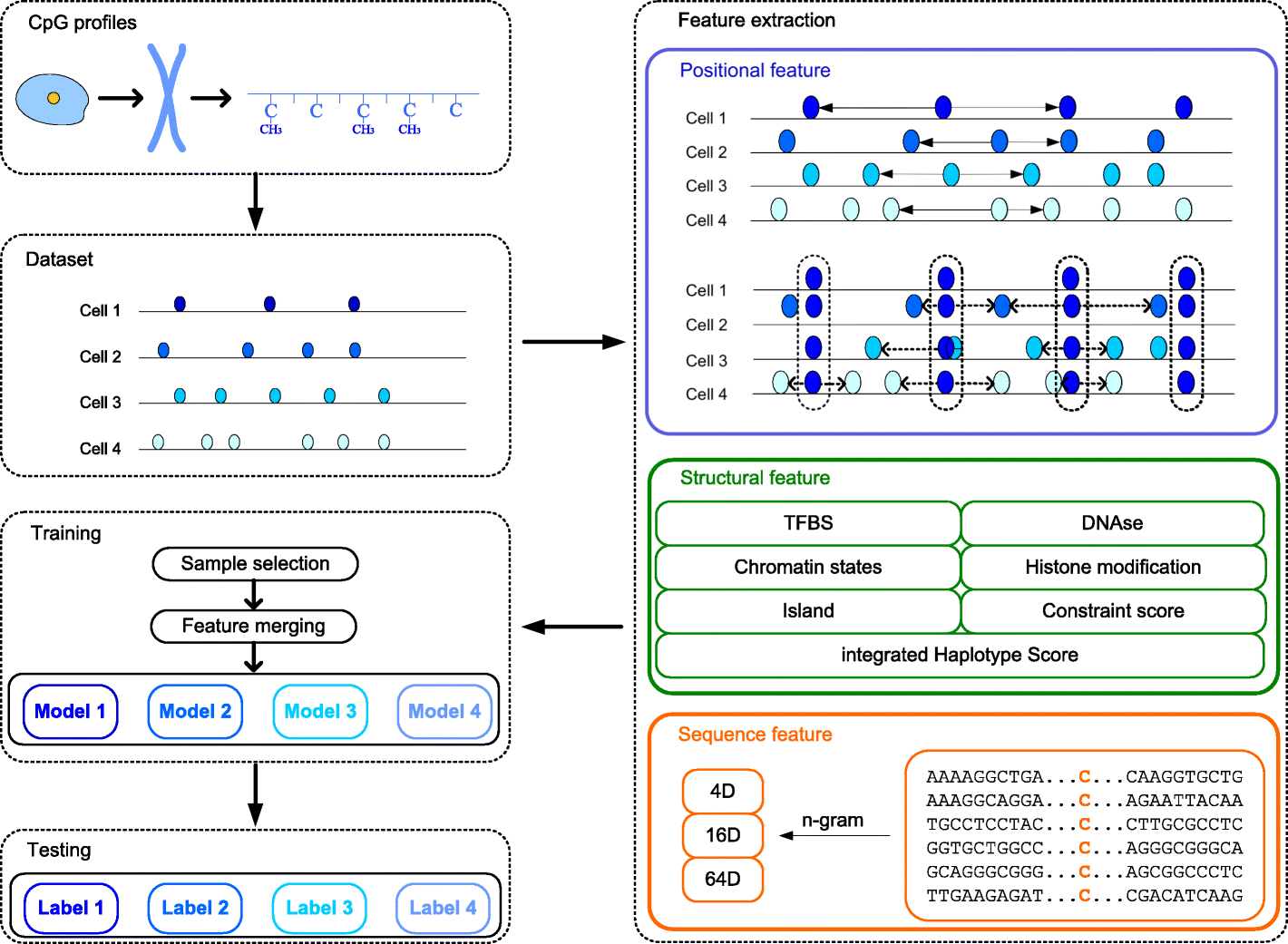 LightCpG: a multi-view CpG sites detection on single-cell