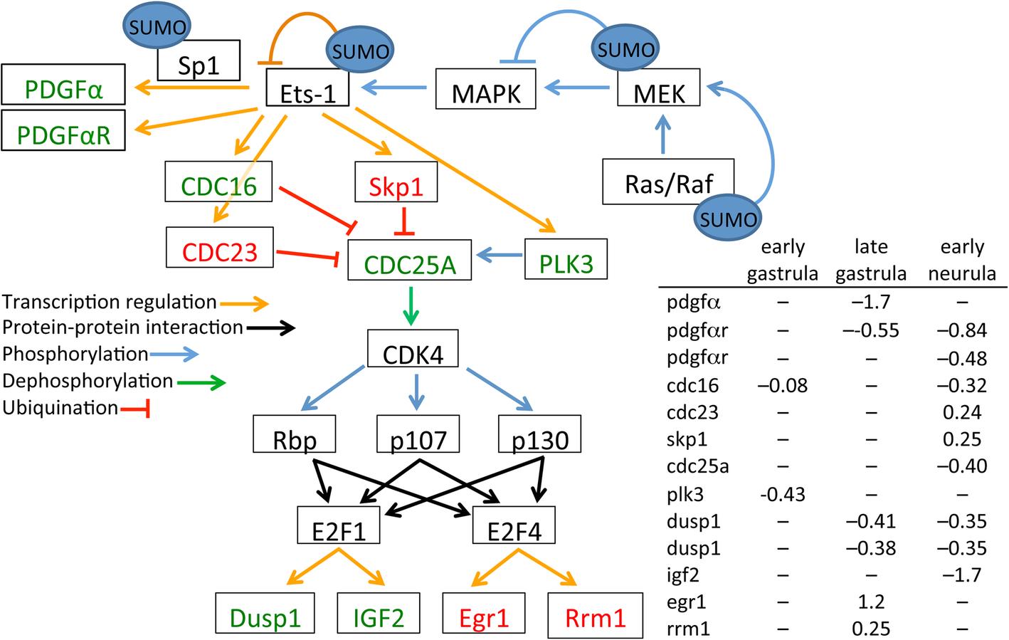 A deficiency in SUMOylation activity disrupts multiple