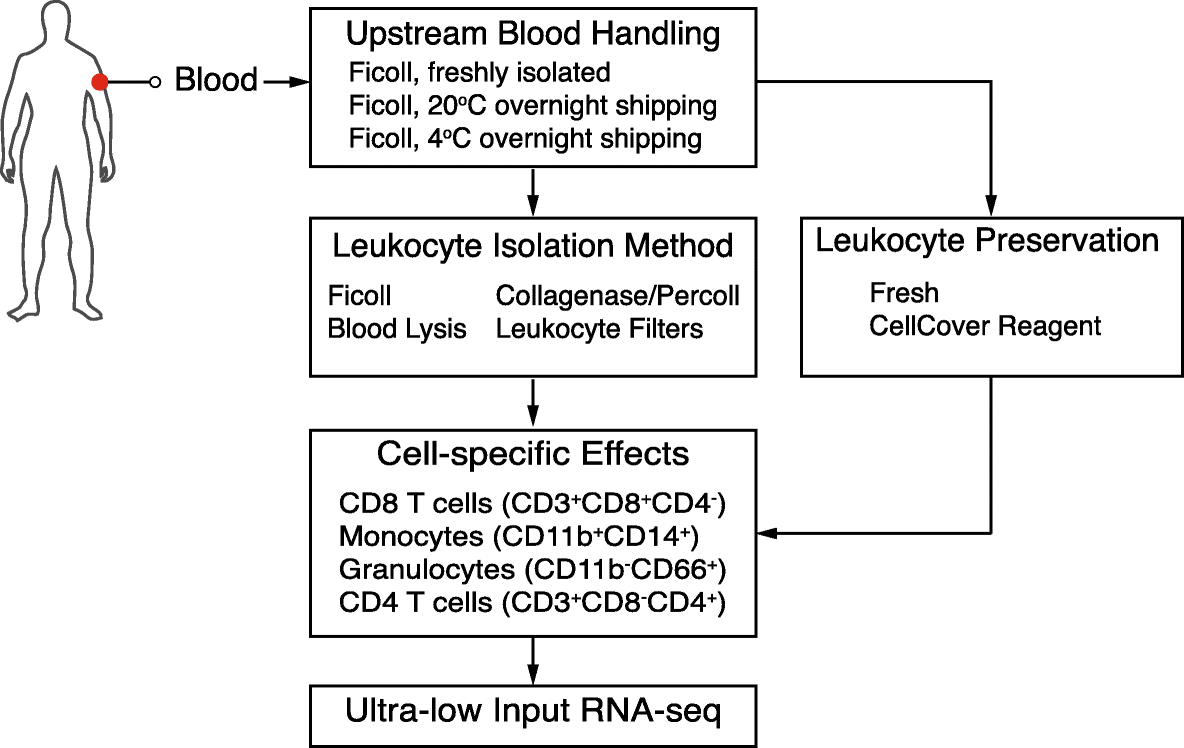 Blood handling and leukocyte isolation methods impact the