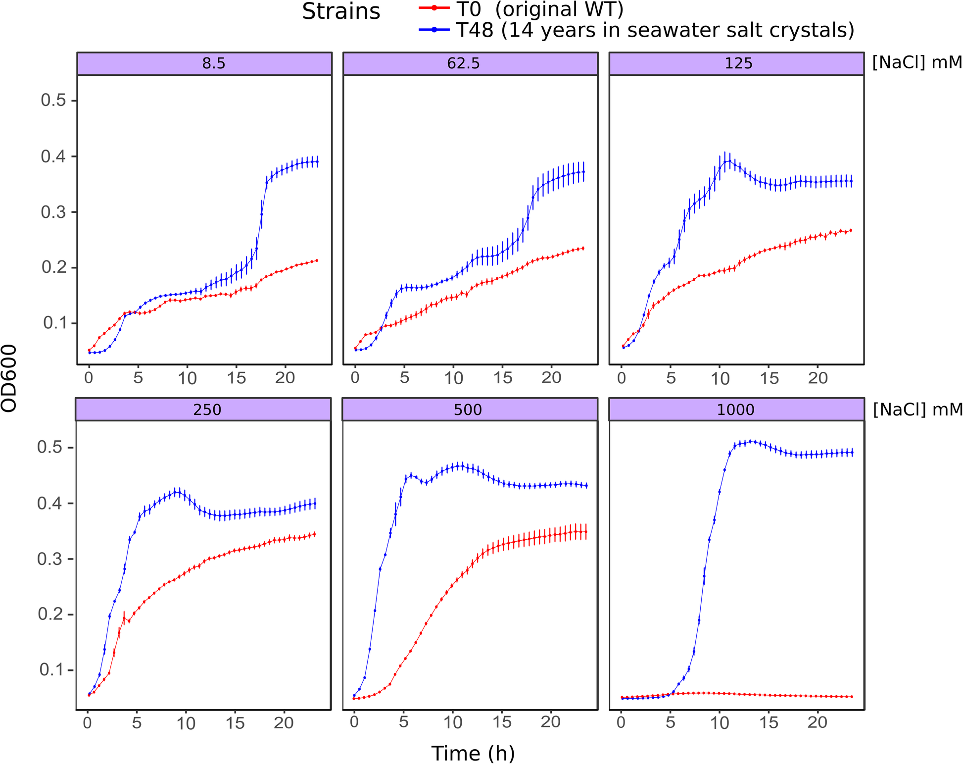 Seawater salt-trapped Pseudomonas aeruginosa survives for years and