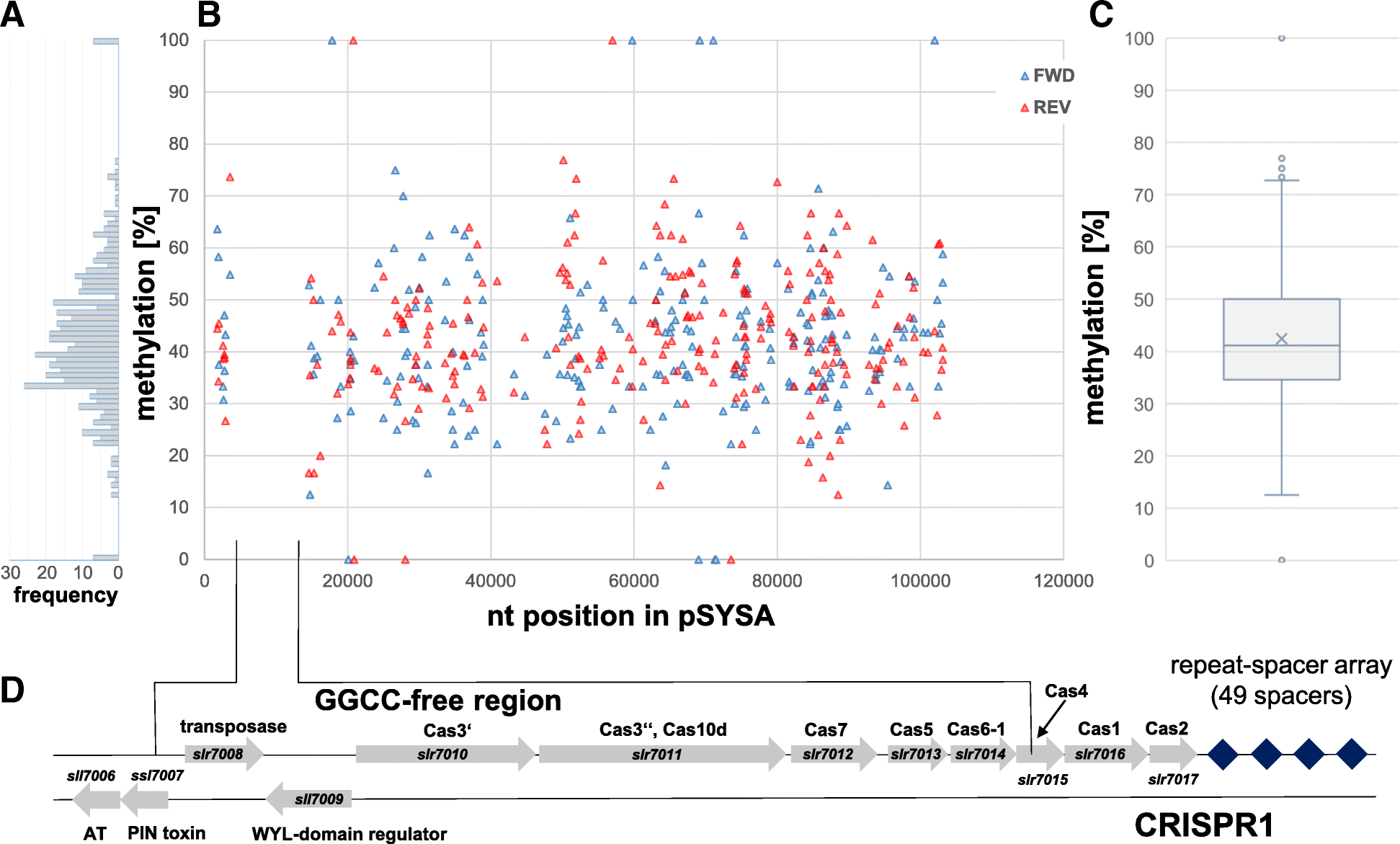 Divergent methylation of CRISPR repeats and cas genes in a