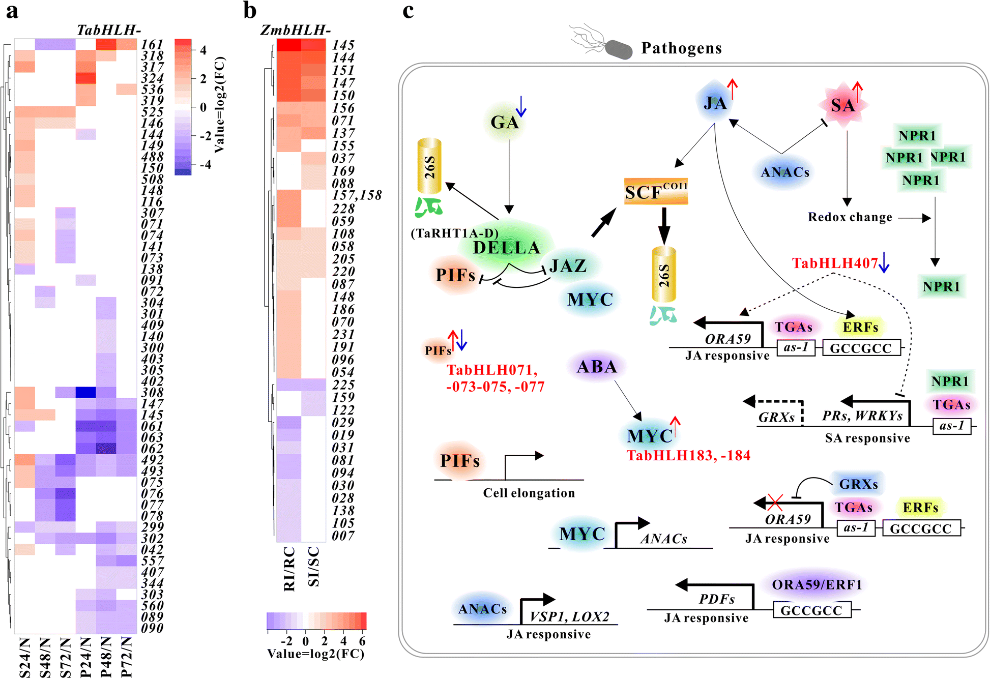 Comparative functional genomics analysis of bHLH gene family