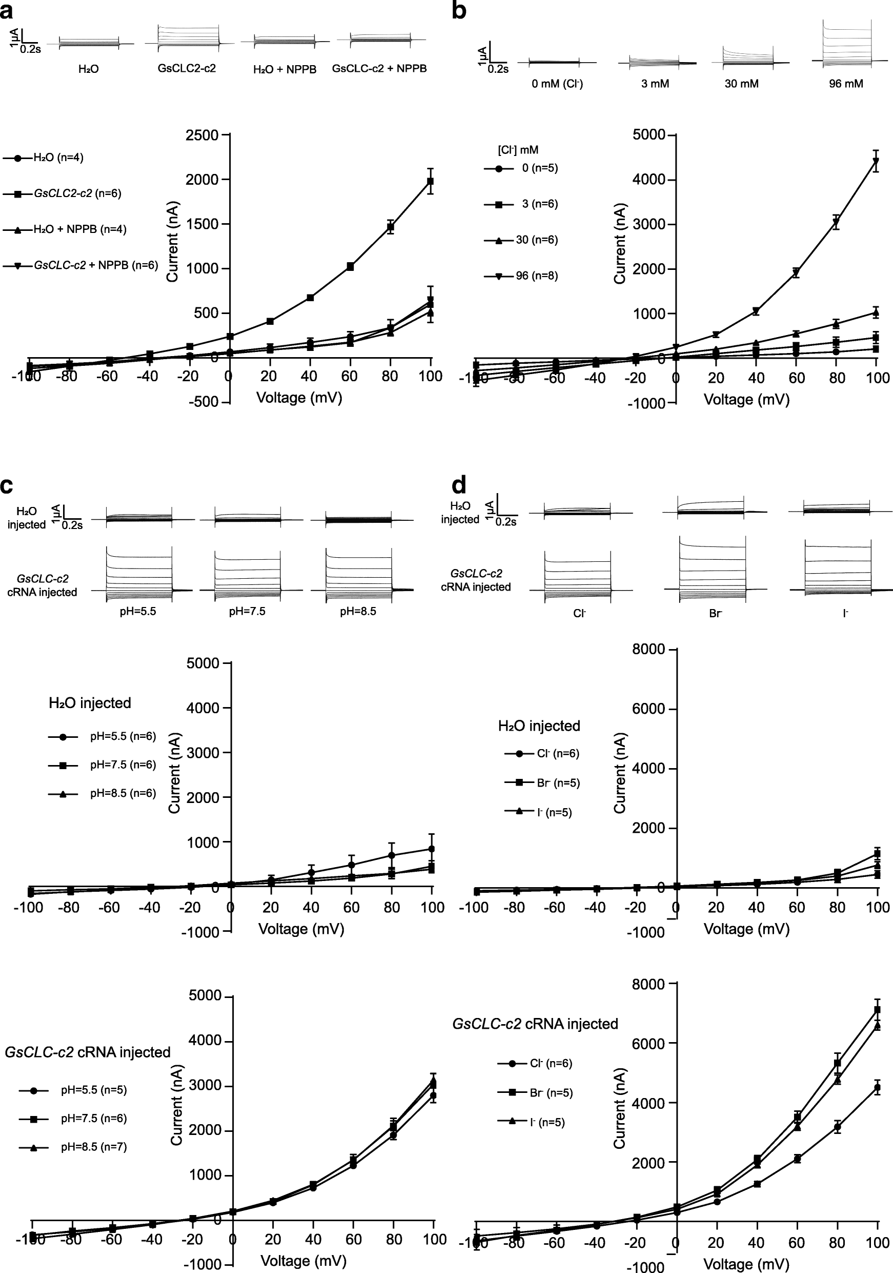 Identification and functional characterization of the
