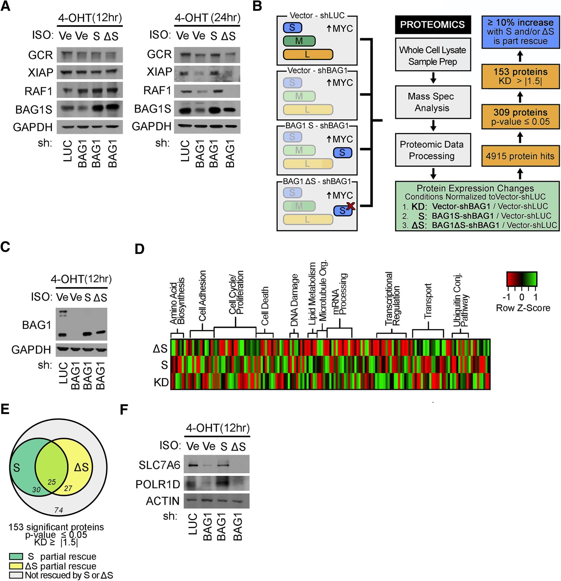 proteomics analysis identifies park7 - HD1946×2018