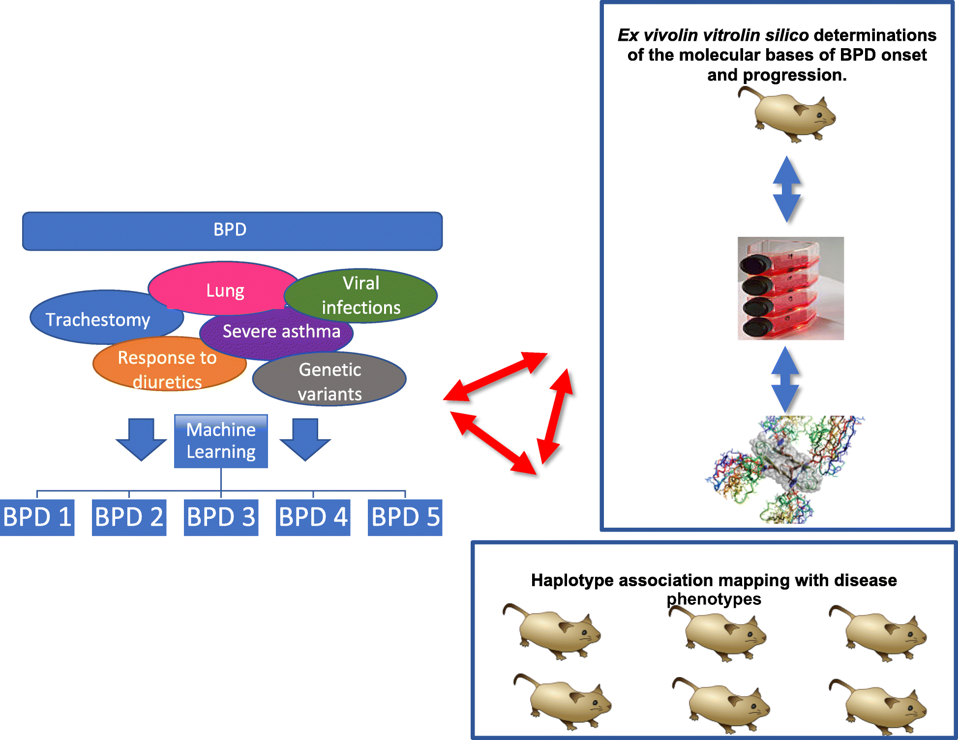 The discovery BPD (D-BPD) program: study protocol of a