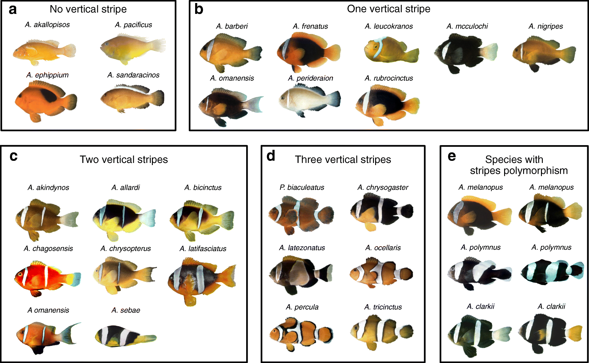 Ontogenetic and phylogenetic simplification during white