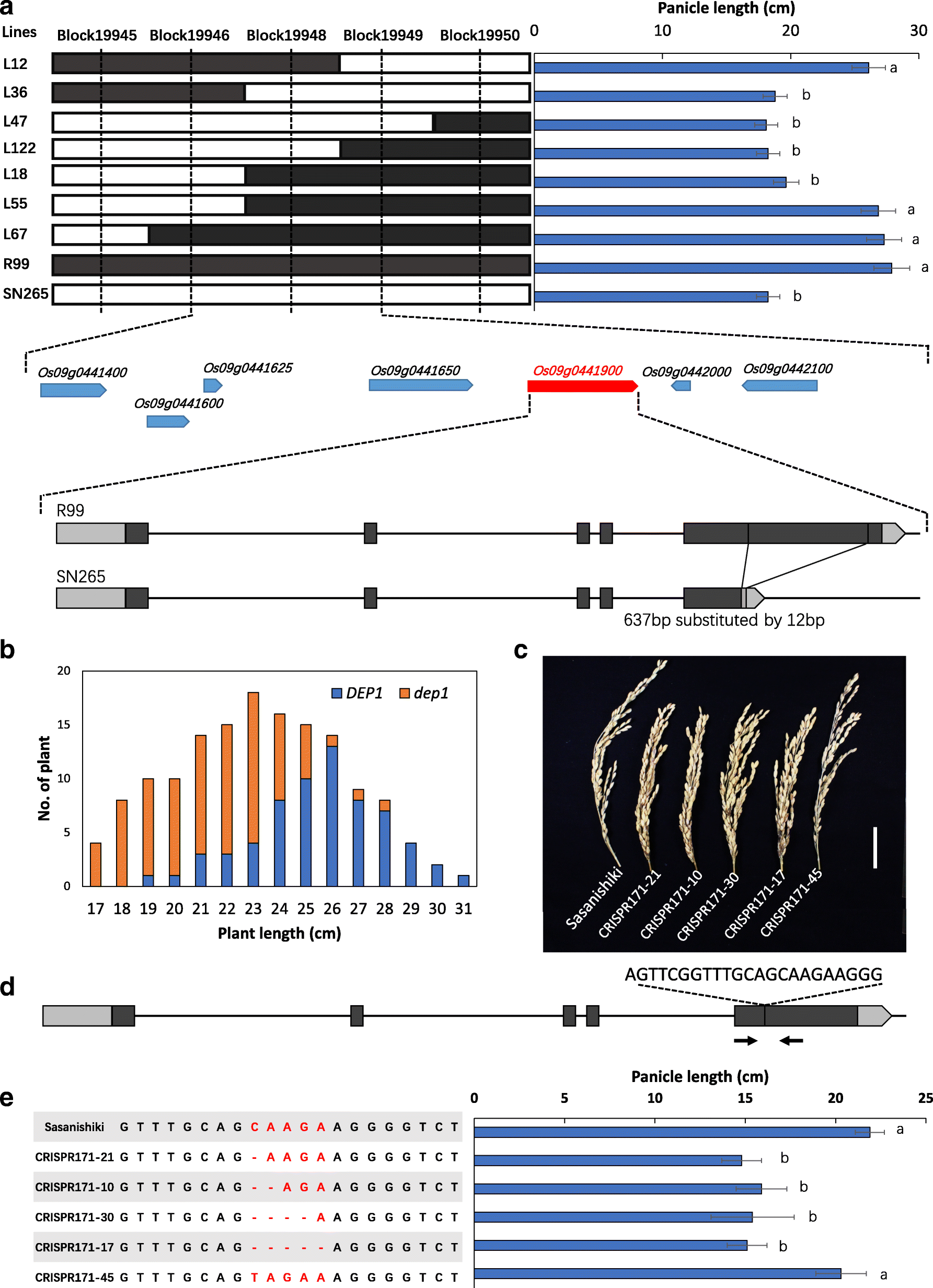 Genome sequencing of rice subspecies and genetic analysis of