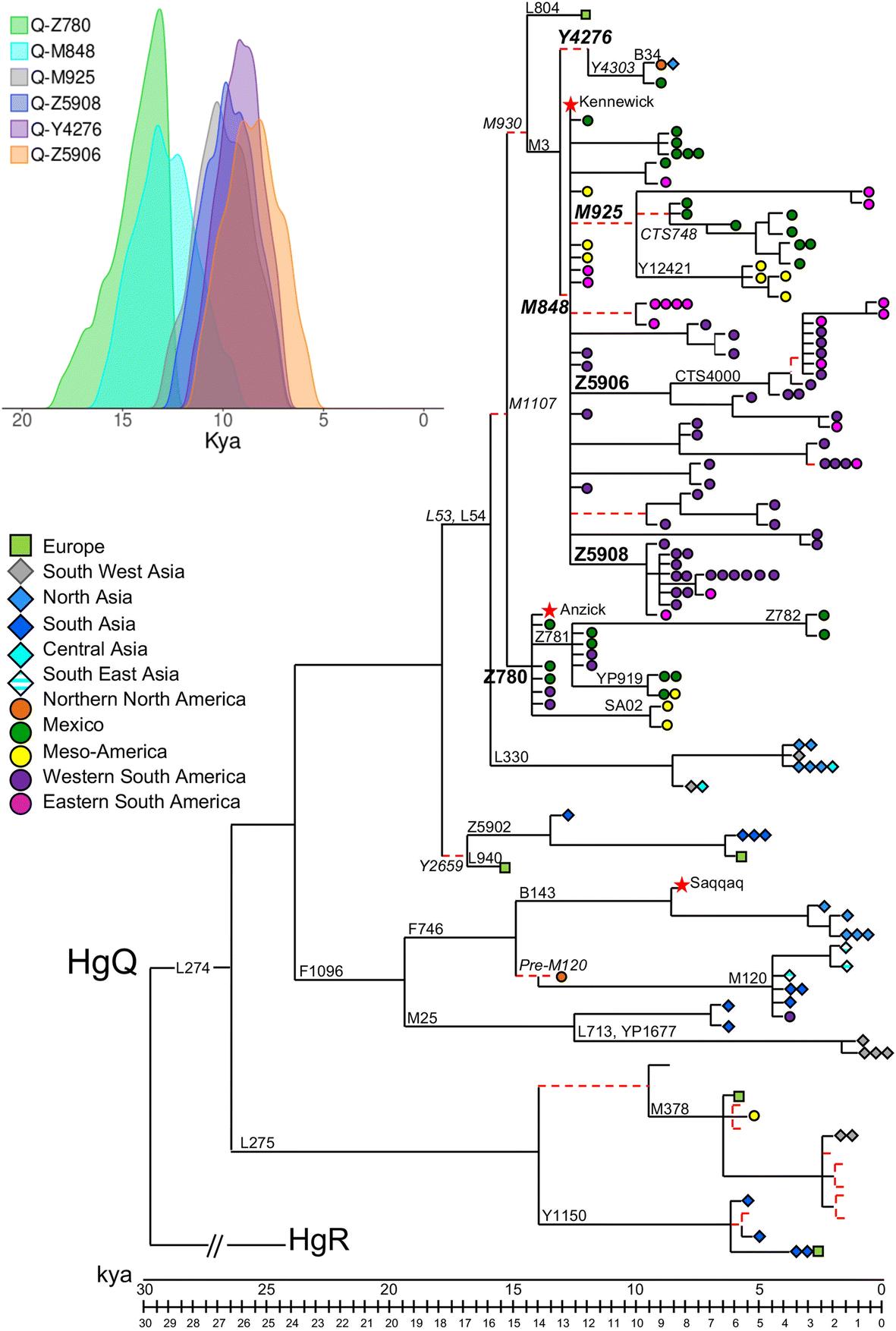 Analysis of the human Y-chromosome haplogroup Q