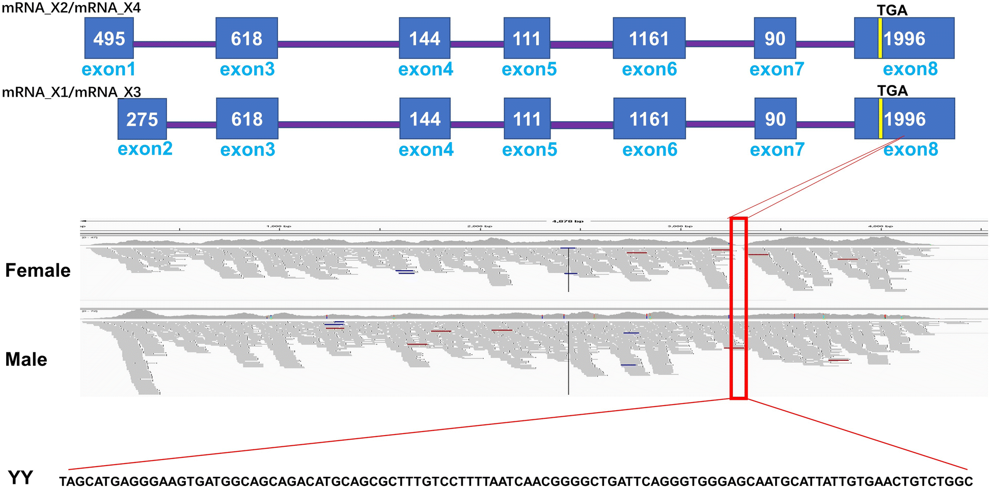The Y chromosome sequence of the channel catfish suggests novel sex