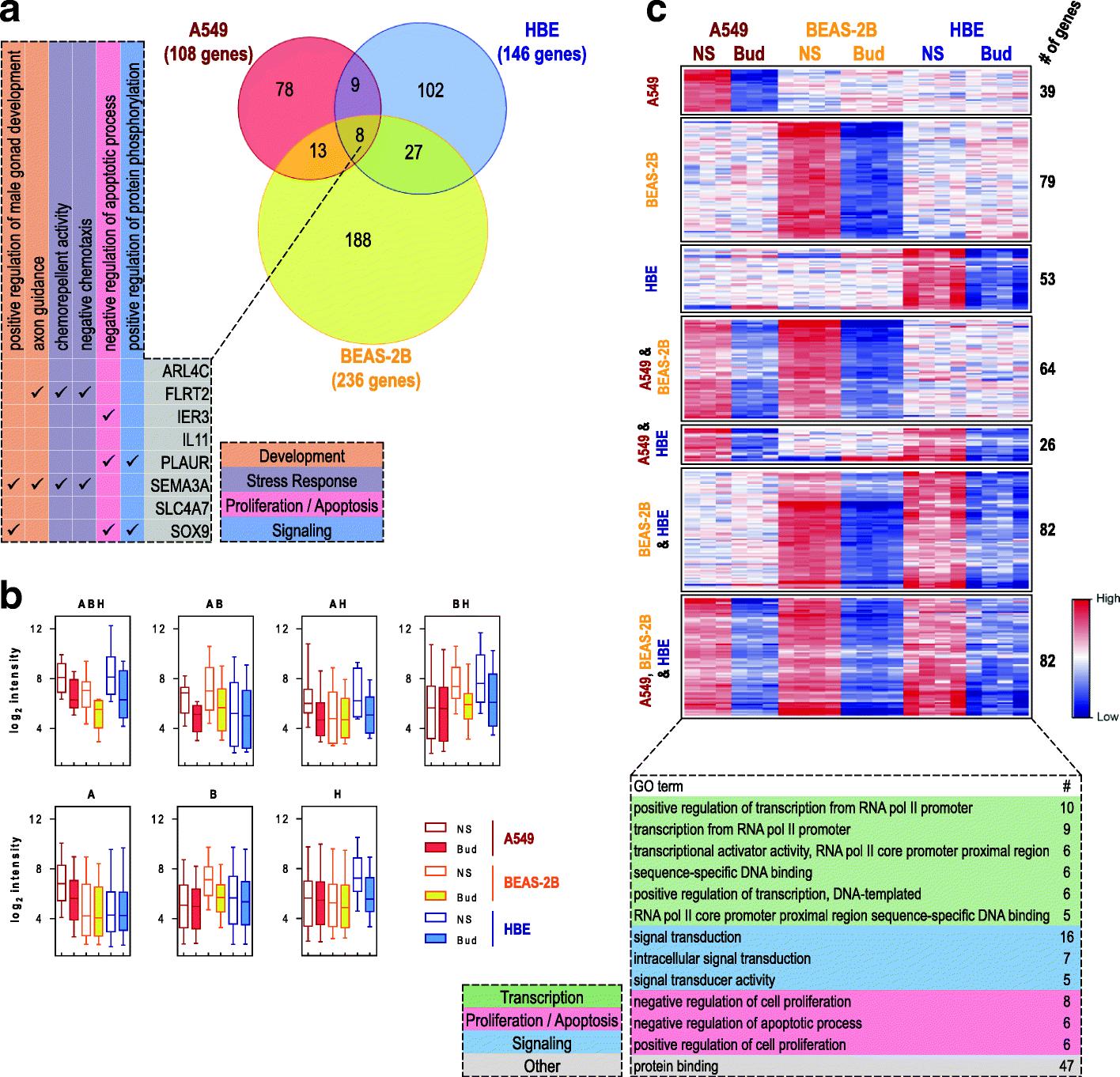 Glucocorticoid-driven transcriptomes in human airway