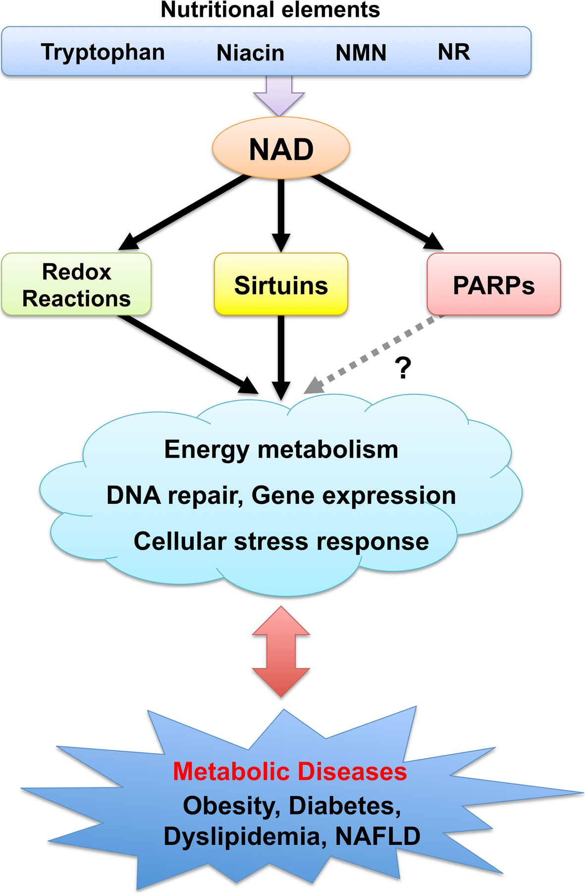 Implications of altered NAD metabolism in metabolic disorders