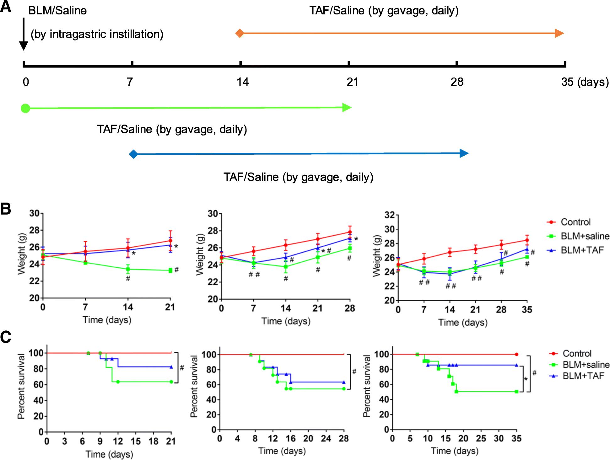 Tenofovir alafenamide fumarate attenuates bleomycin-induced