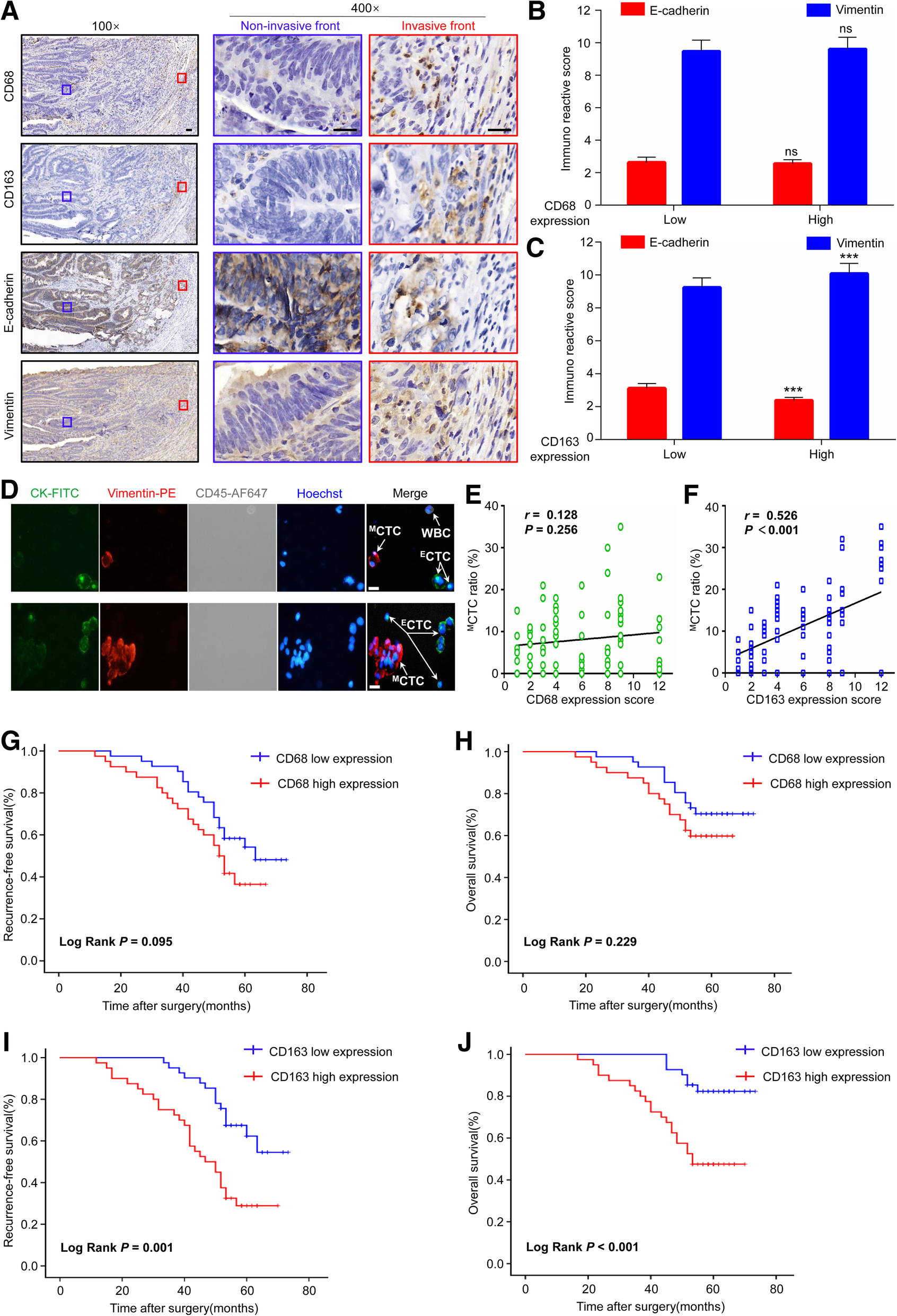Crosstalk between cancer cells and tumor associated macrophages is