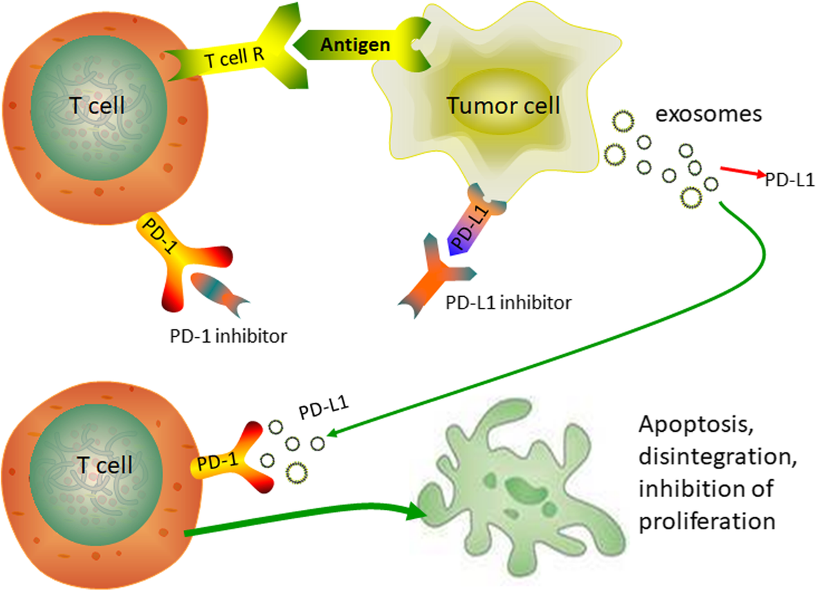 Effects of exosomes on pre-metastatic niche formation in