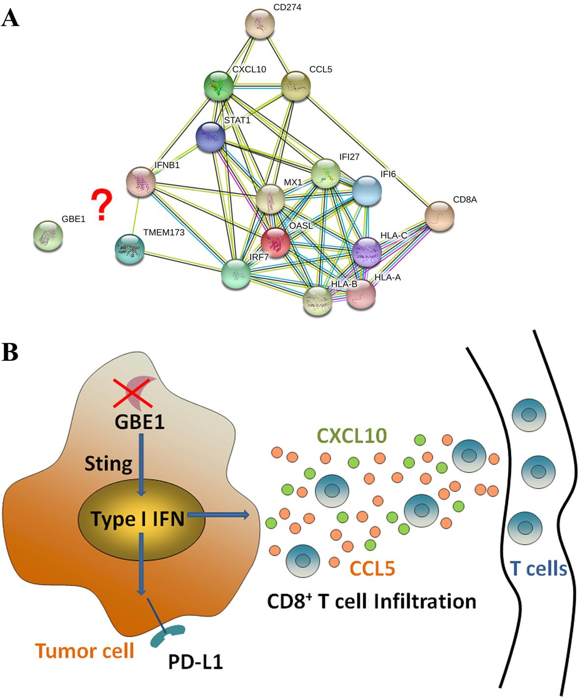 Lung Adenocarcinoma-intrinsic GBE1 Signaling Inhibits Anti