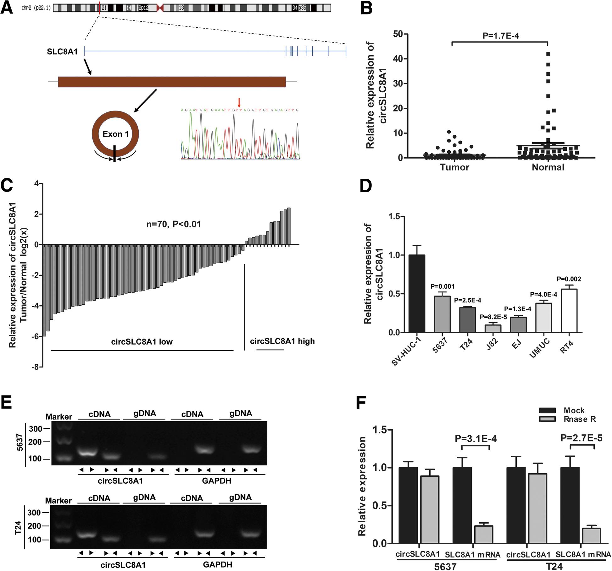 Circular RNA circSLC8A1 acts as a sponge of miR-130b/miR-494