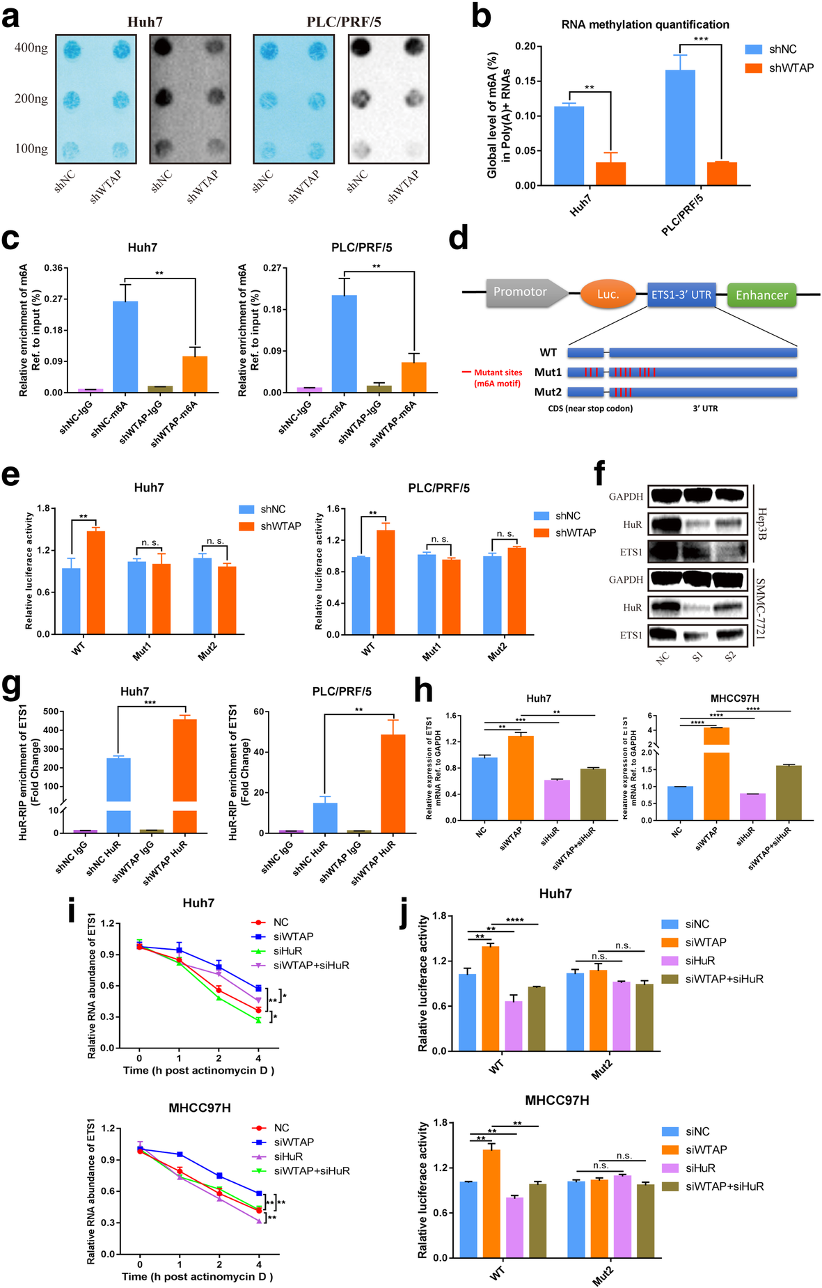WTAP facilitates progression of hepatocellular carcinoma via
