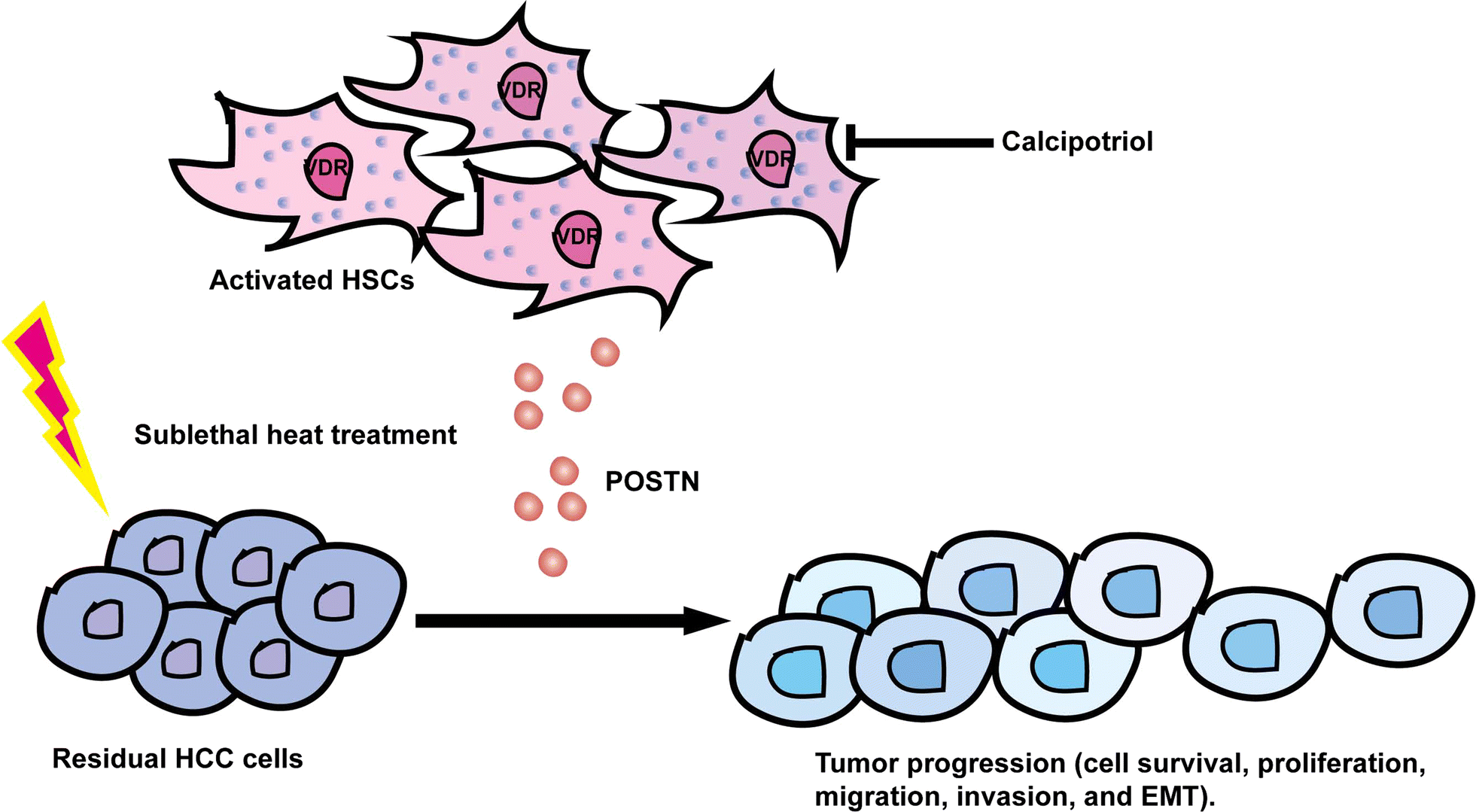 Periostin involved in the activated hepatic stellate cells