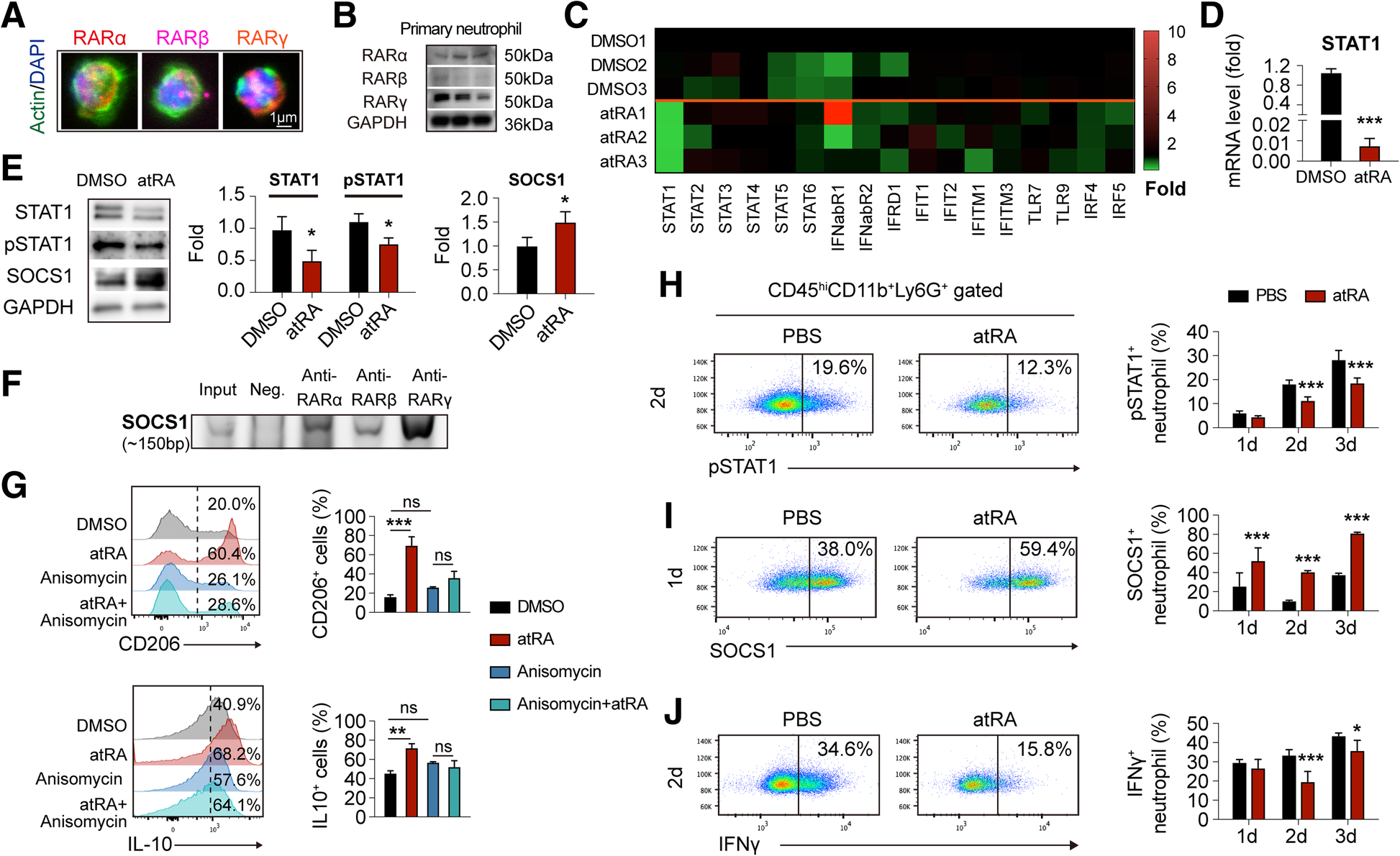 All trans-retinoic acid protects against acute ischemic