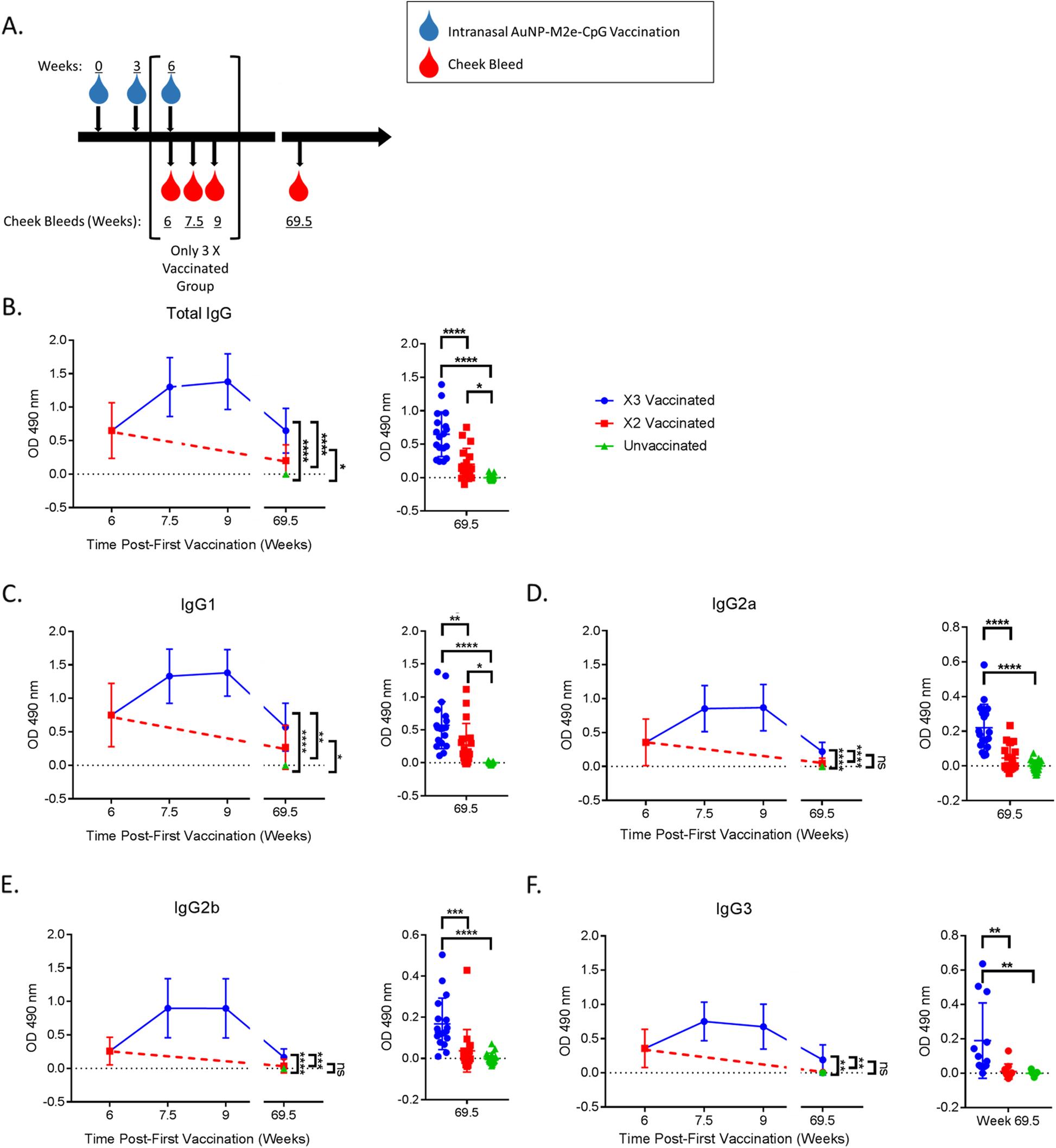 AuNP-M2e + sCpG vaccination of juvenile mice generates