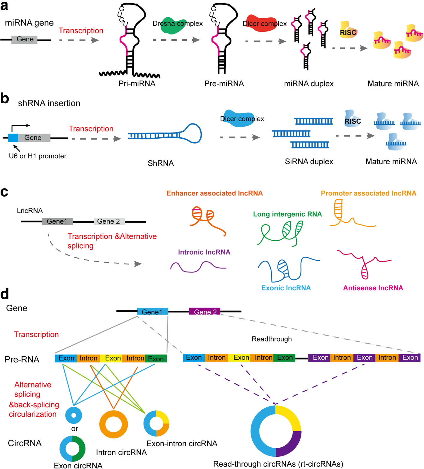 Noncoding RNAs in cancer therapy resistance and targeted