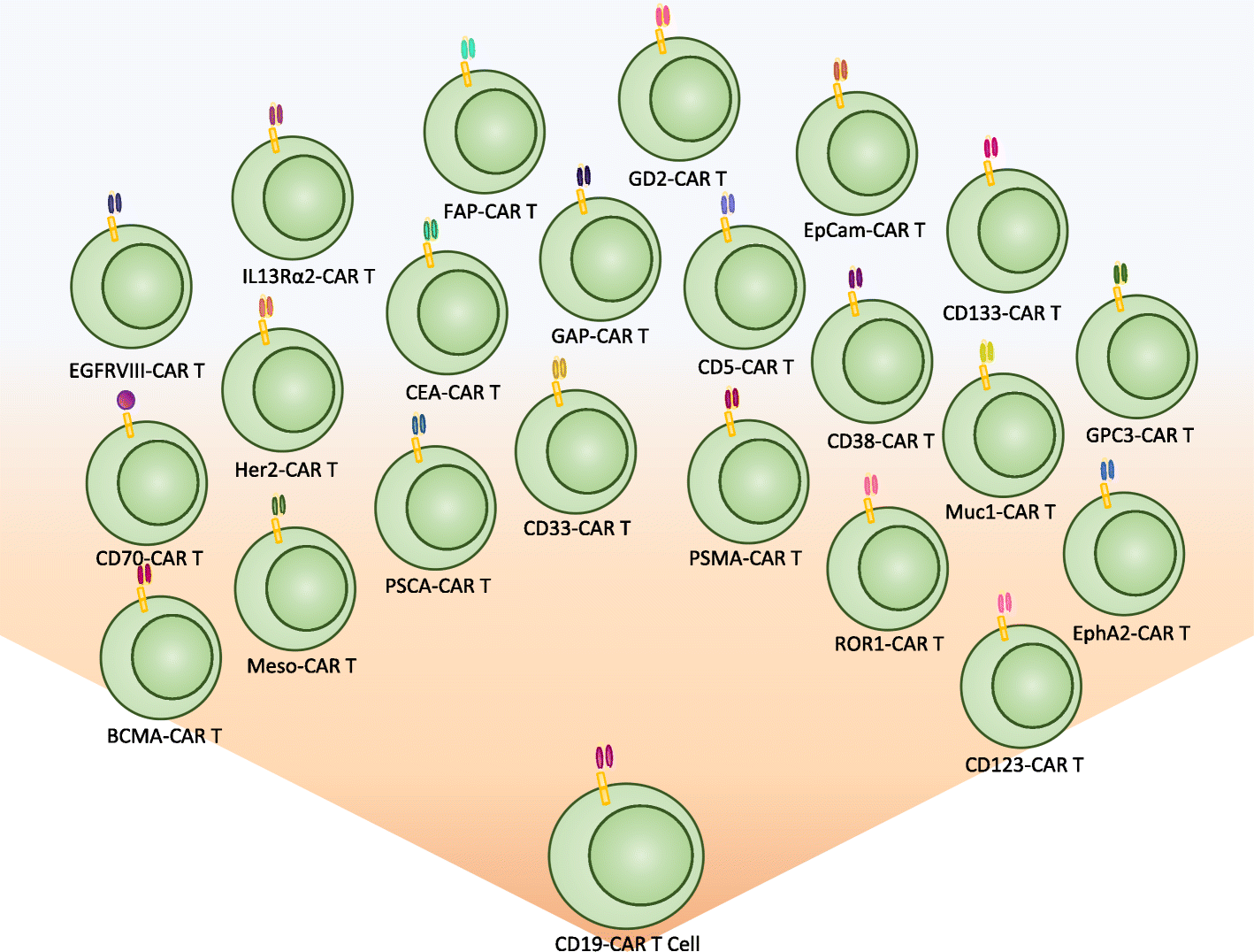 cells expressing cd19 specific cars - HD 1418×1076