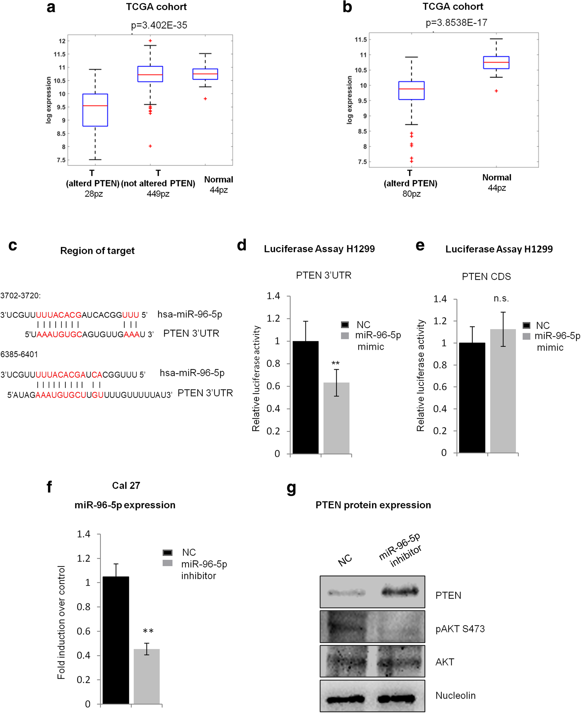 miR-96-5p targets PTEN expression affecting radio-chemosensitivity