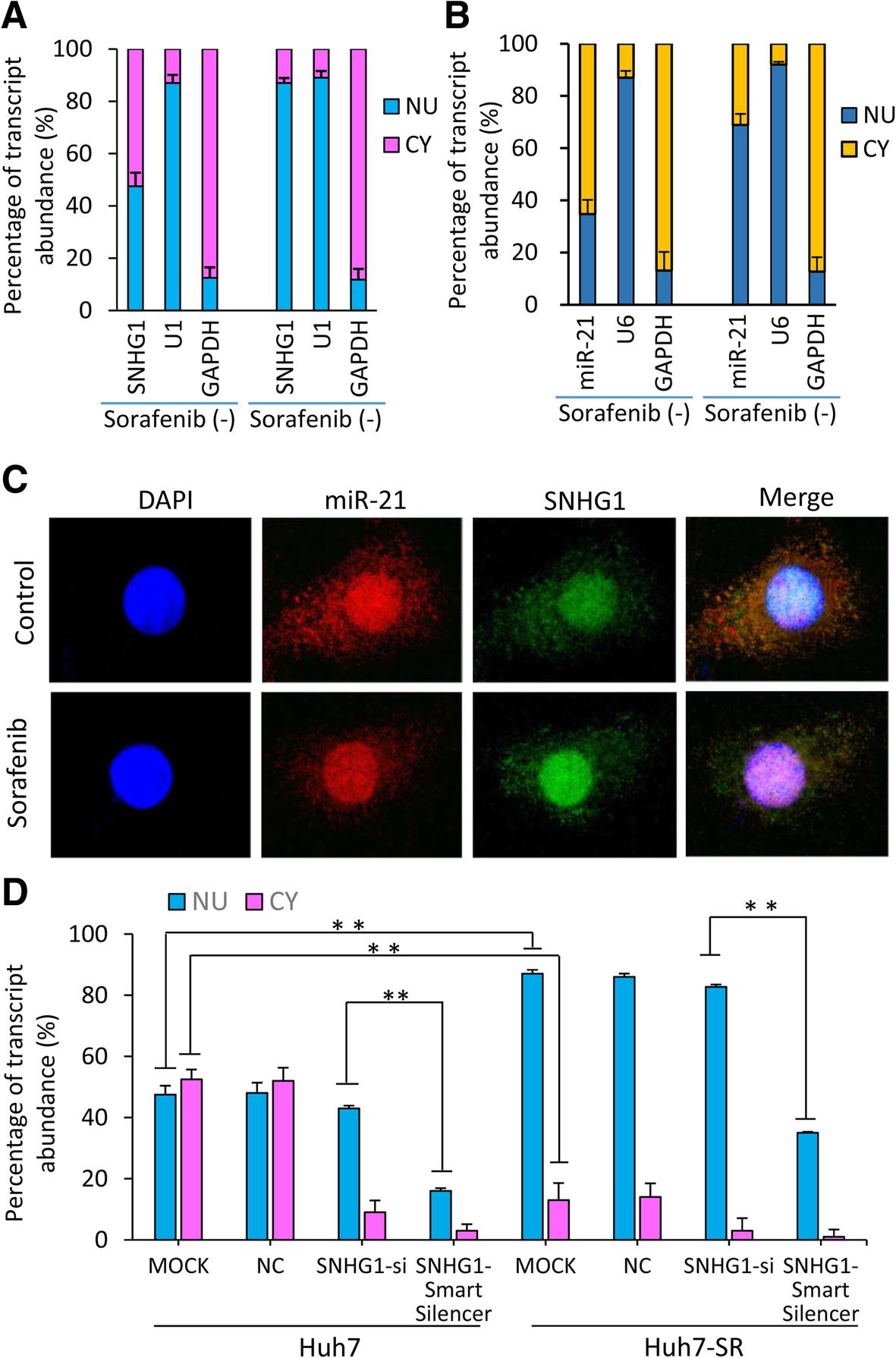 LncRNA SNHG1 contributes to sorafenib resistance by