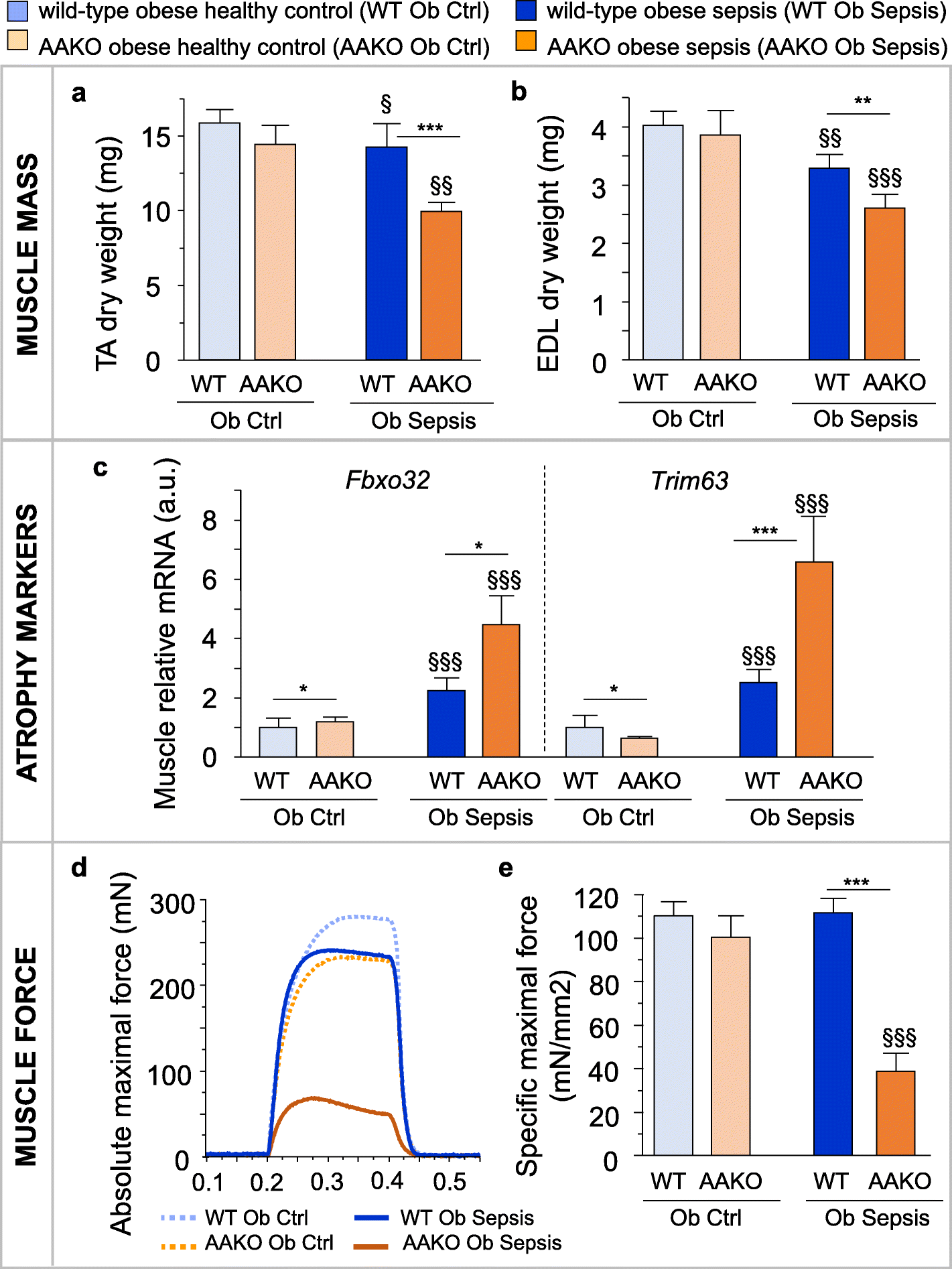 Adipose tissue protects against sepsis-induced muscle