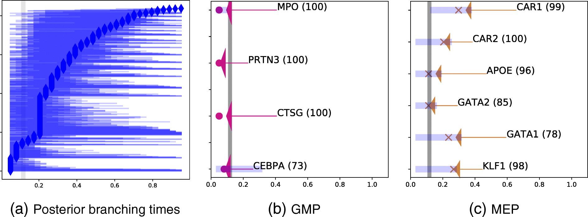 BGP: identifying gene-specific branching dynamics from