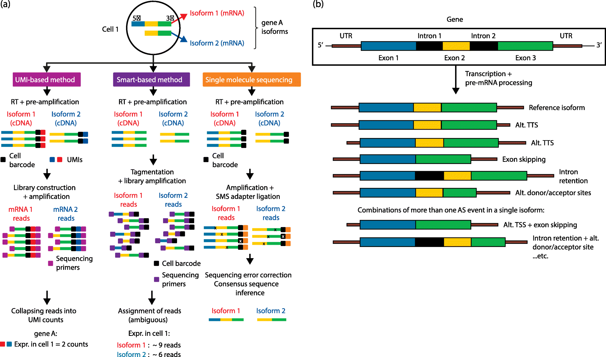 Single-cell RNAseq for the study of isoforms—how is that
