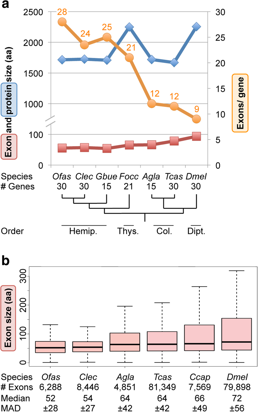 Molecular evolutionary trends and feeding ecology diversification in