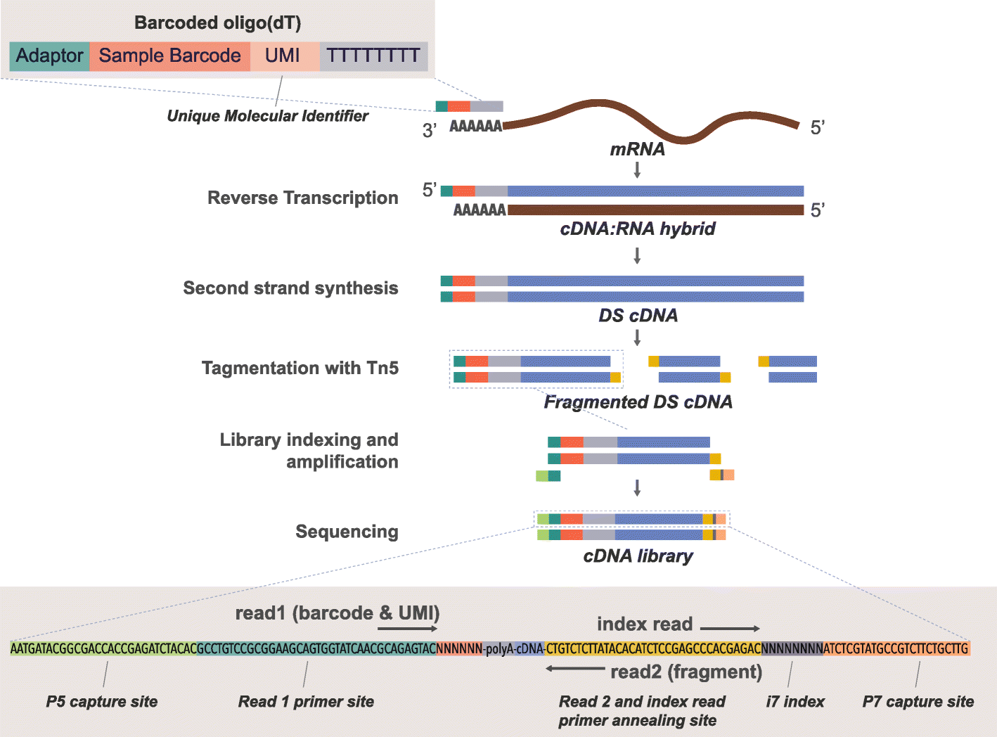 BRB-seq: ultra-affordable high-throughput transcriptomics enabled by