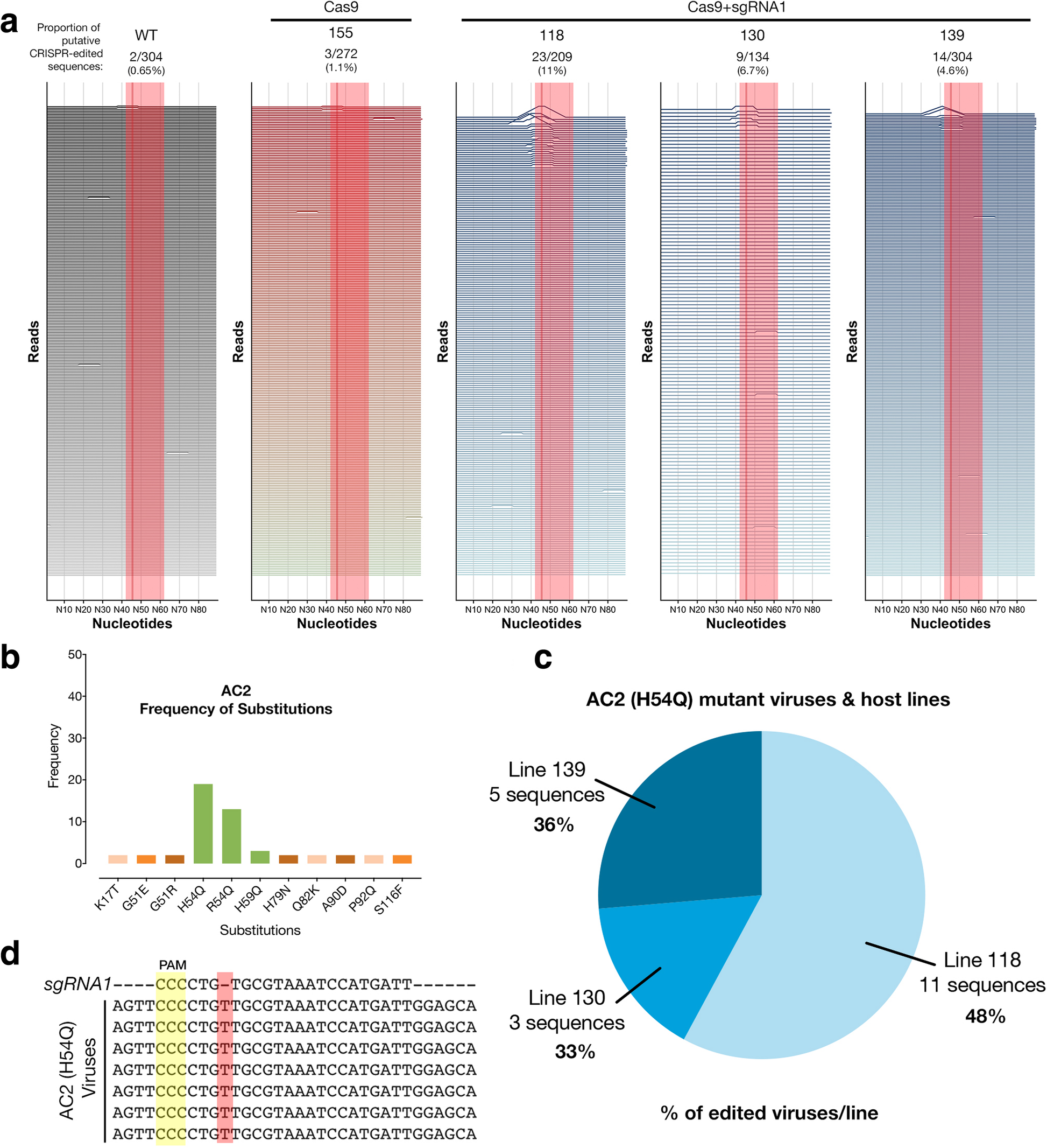 Linking CRISPR-Cas9 interference in cassava to the evolution