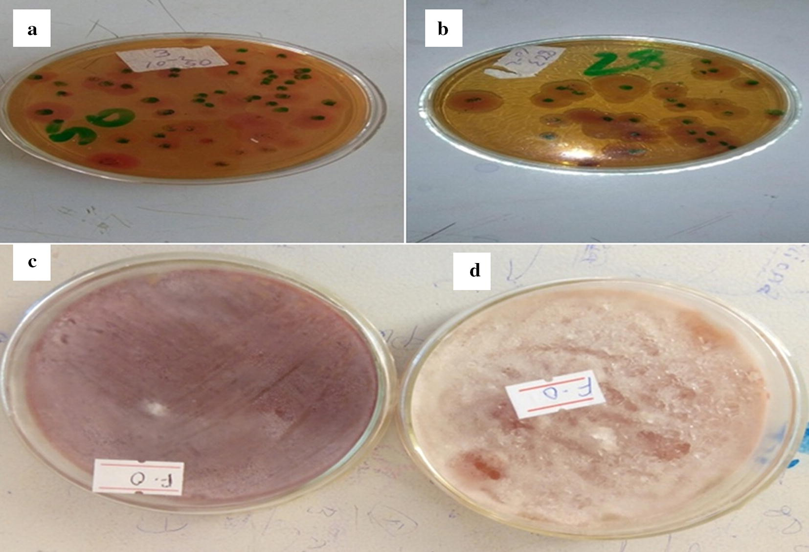 Copper doped zeolite composite for antimicrobial activity