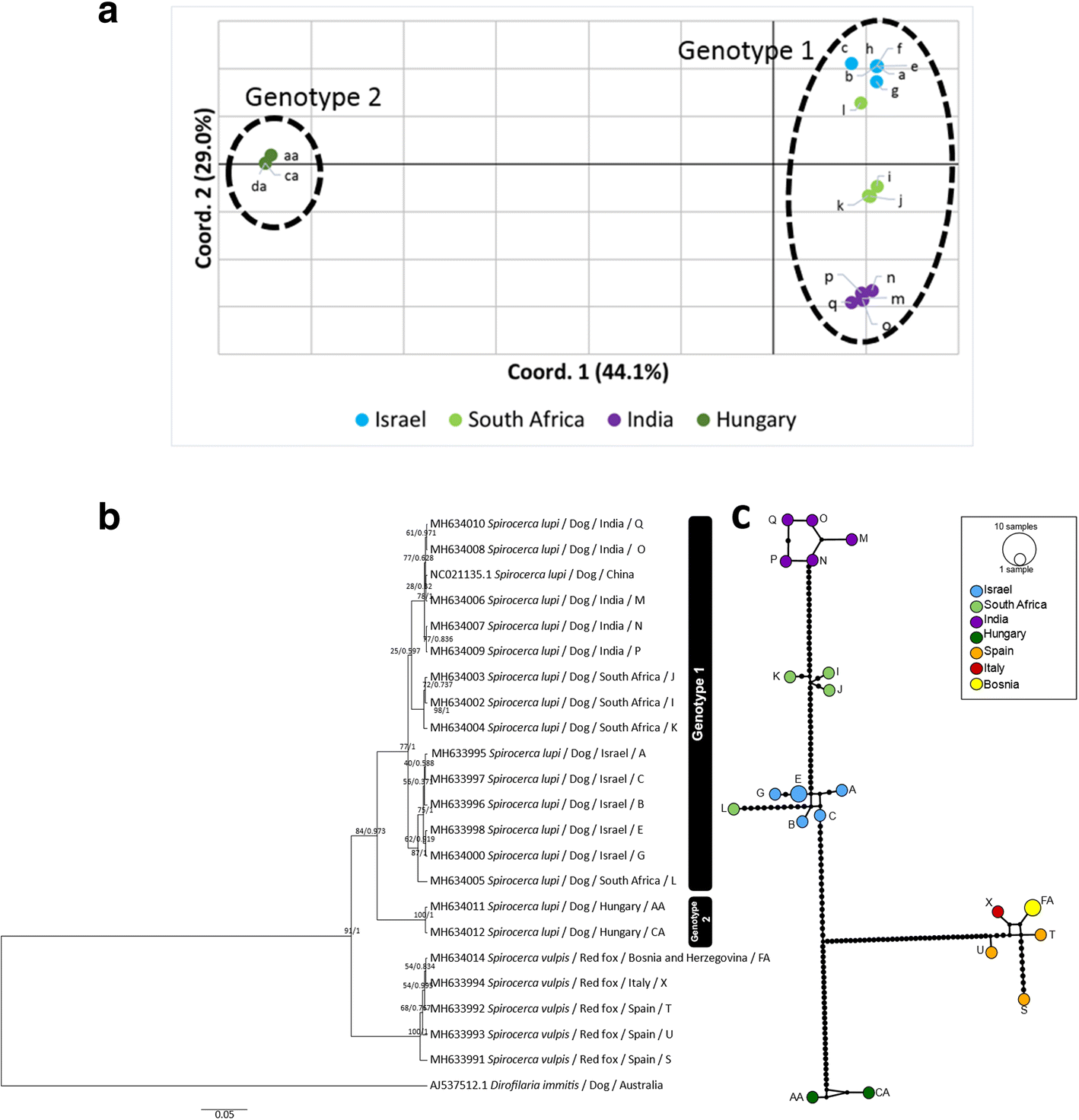 Phylogenetic ysis of Spirocerca lupi and Spirocerca ... on