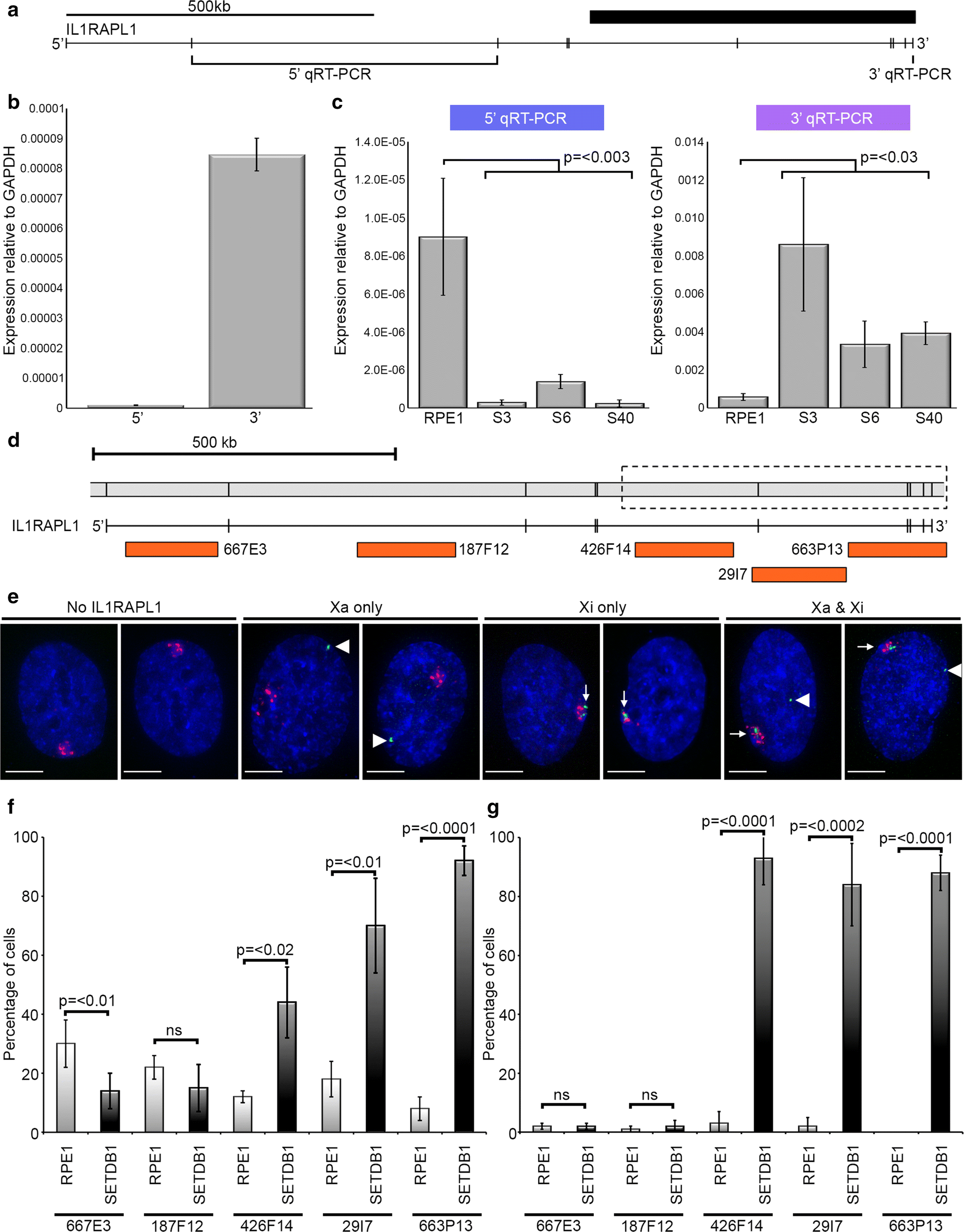 Loss of SETDB1 decompacts the inactive X chromosome in part through