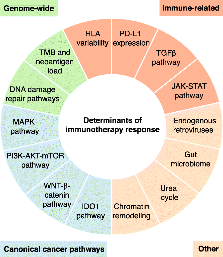 Genomics of response to immune checkpoint therapies for