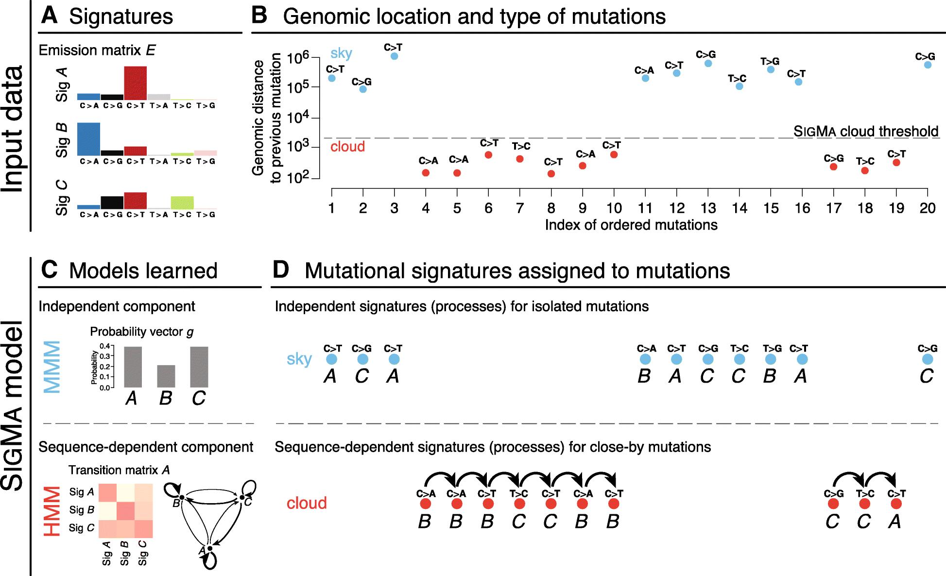 Hidden Markov models lead to higher resolution maps of mutation