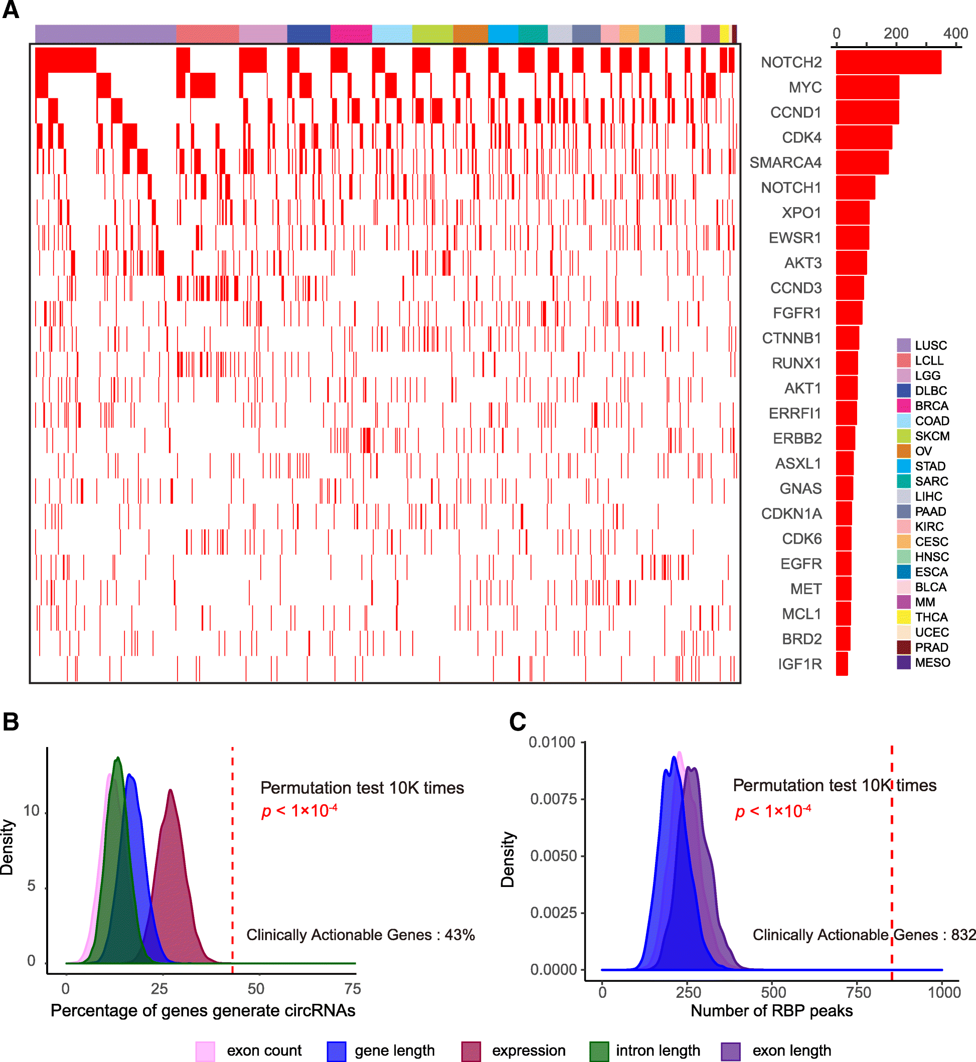 Comprehensive characterization of circular RNAs in ~ 1000