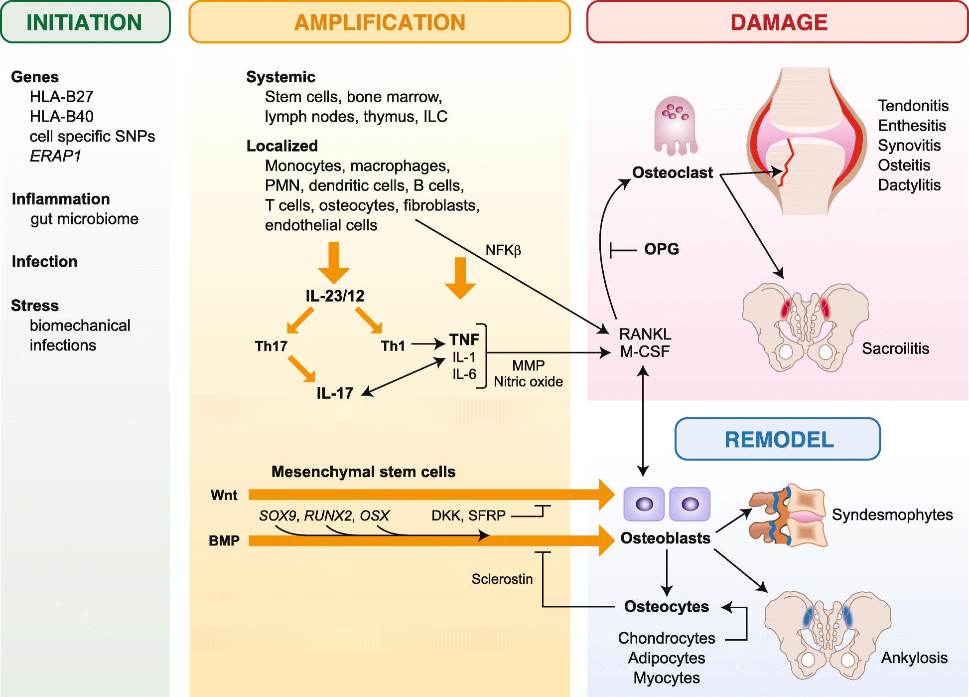 Targeting inflammatory pathways in axial spondyloarthritis