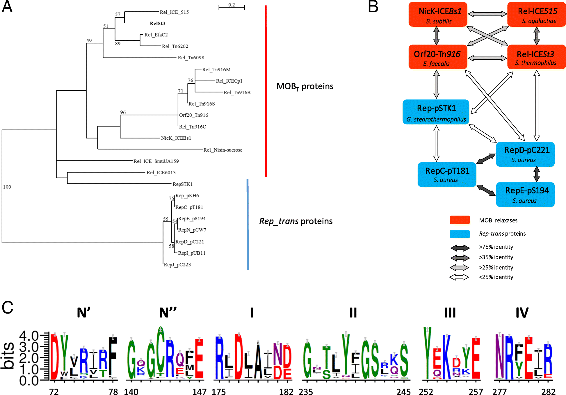 Characterization of a relaxase belonging to the MOBT family