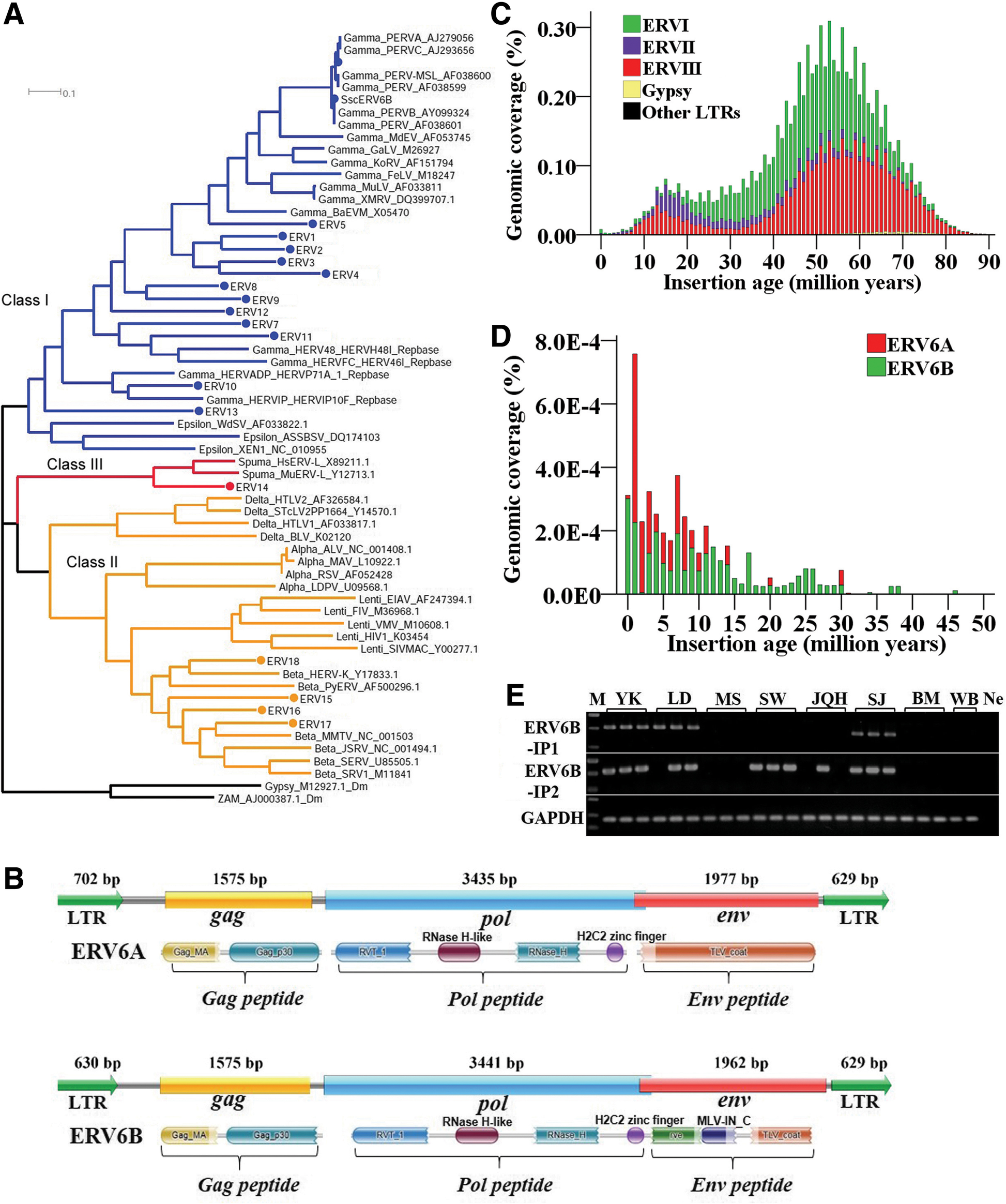 Retrotransposons evolution and impact on lncRNA and protein