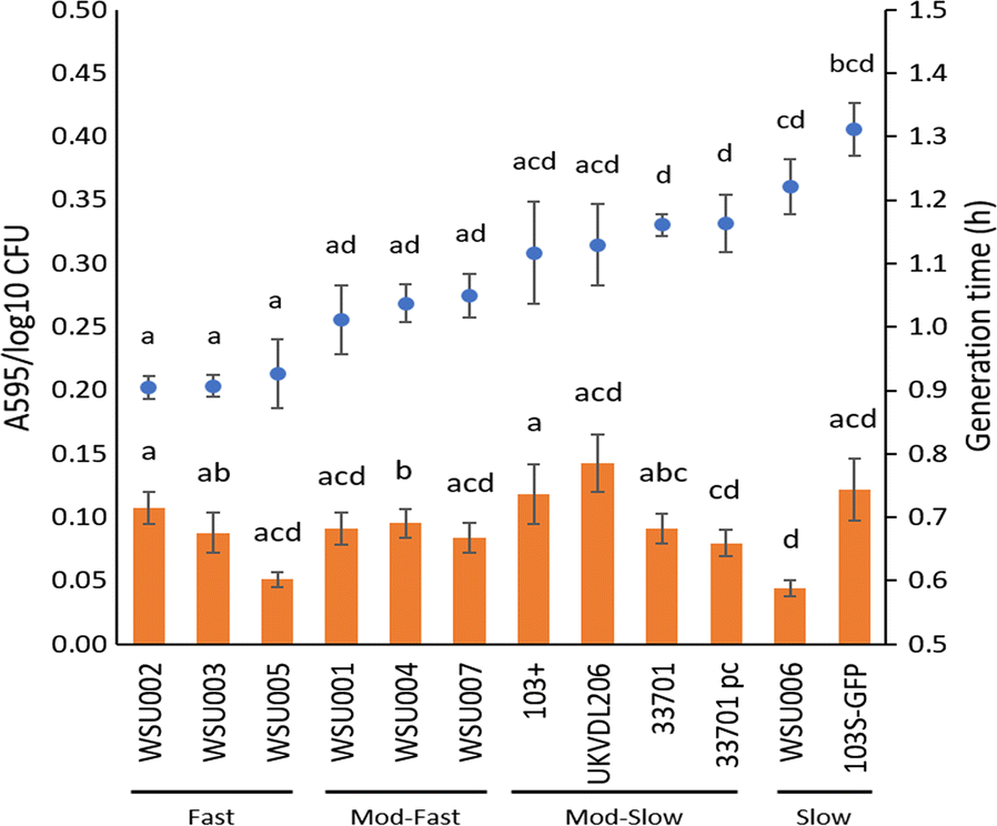 Strain-to-strain variation of Rhodococcus equi growth and