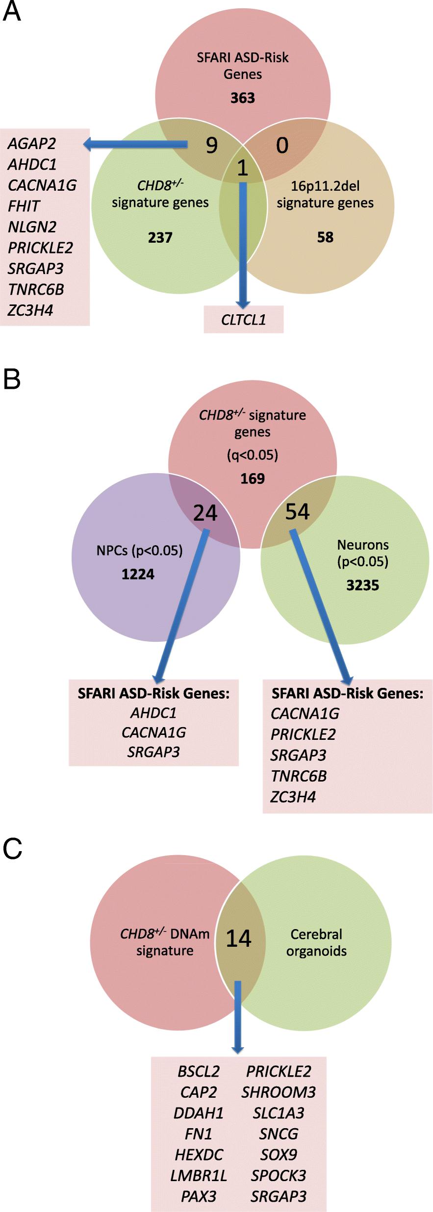 Functional DNA methylation signatures for autism spectrum