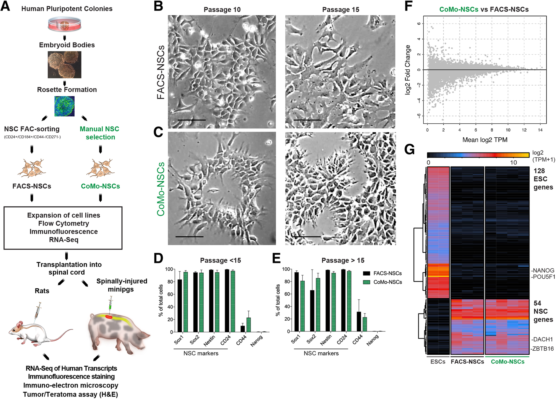 A scalable solution for isolating human multipotent clinical