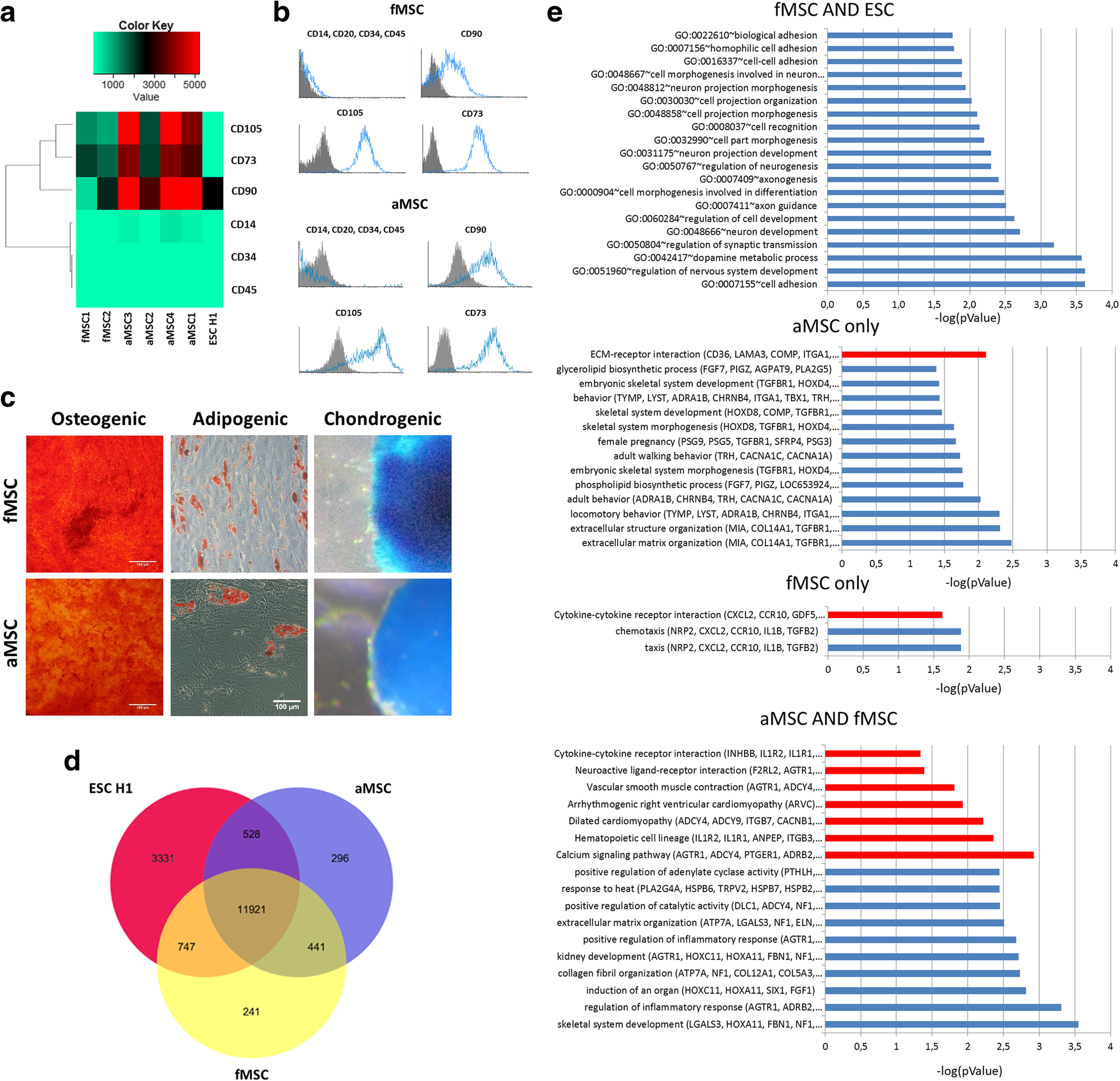 Human iPSC-derived MSCs (iMSCs) from aged individuals