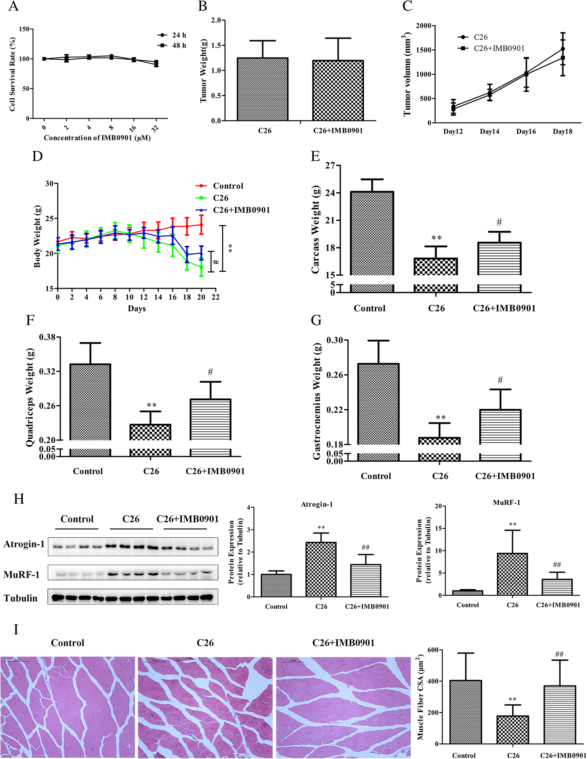 IMB0901 inhibits muscle atrophy induced by cancer cachexia