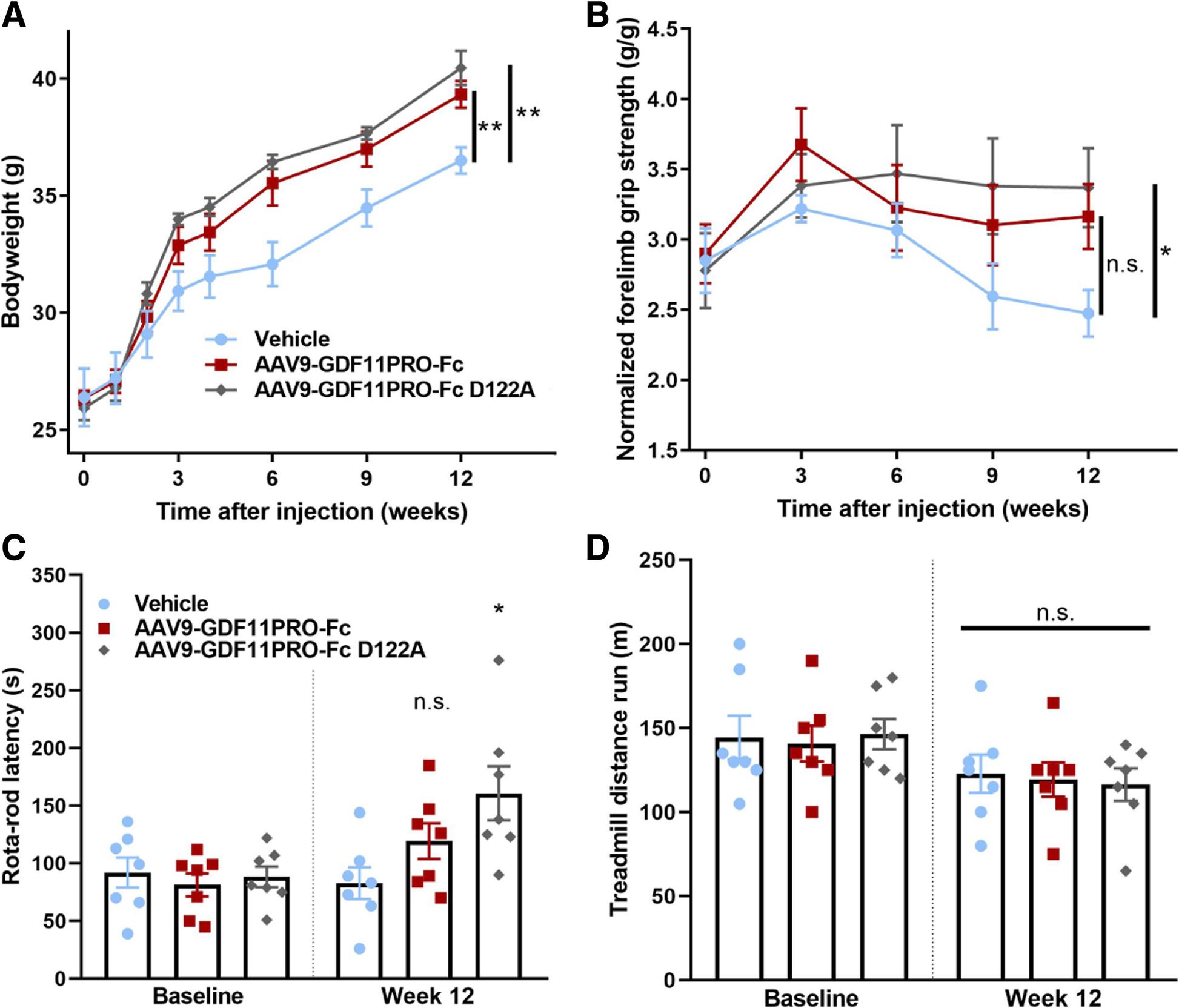 A GDF11/myostatin inhibitor, GDF11 propeptide-Fc, increases skeletal